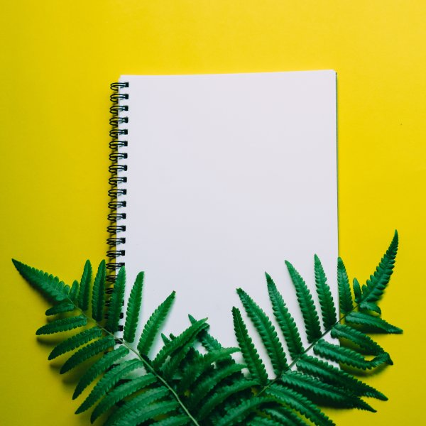 High Angle View Of Note Pad And Ferns On Yellow Background