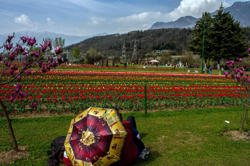Thousands of tourists are expected to visit Asia's largest tulip garden, Siraj Bagh, as it opens to the public.