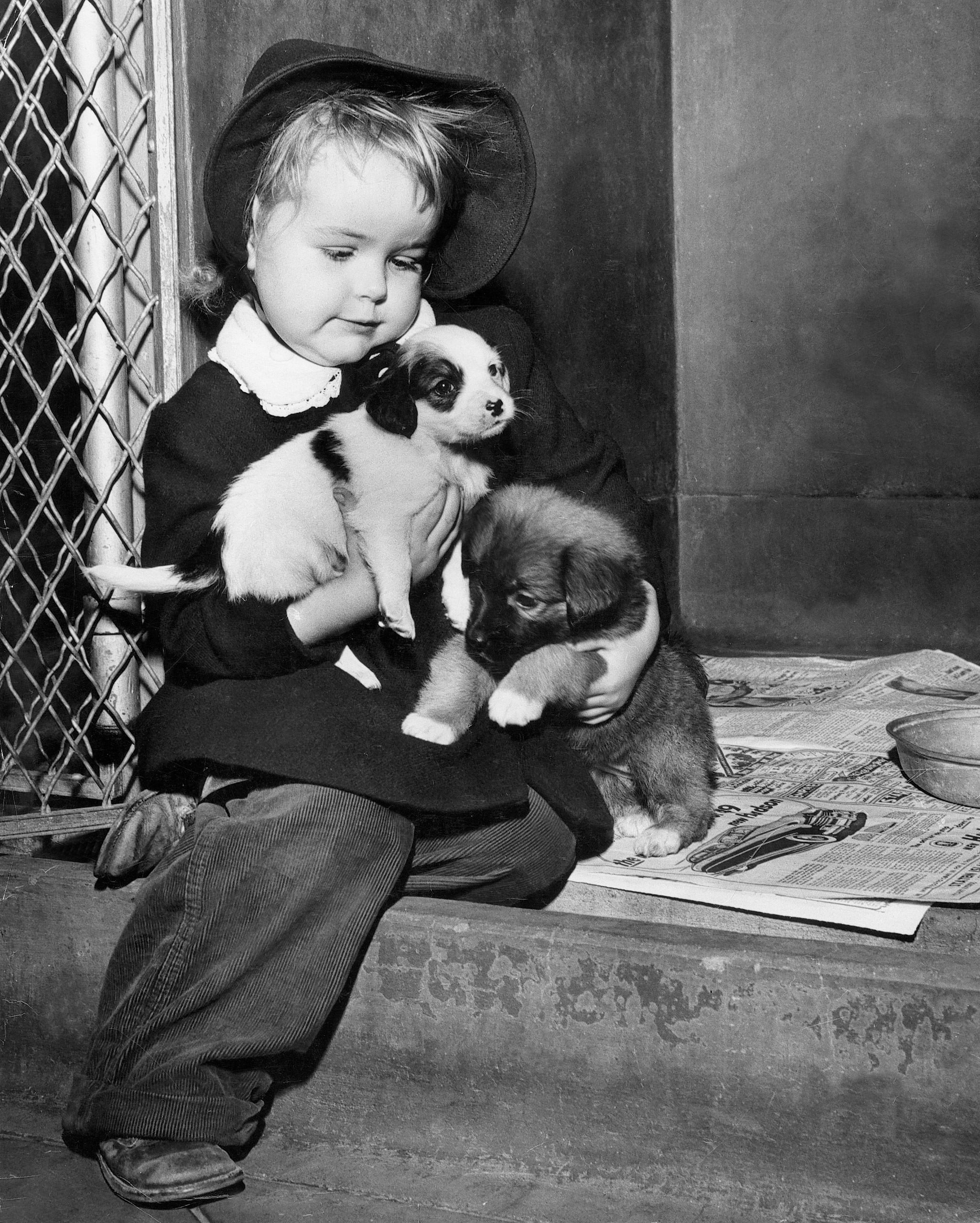 Little girl with ASPCA adoptable puppies, 1948.
