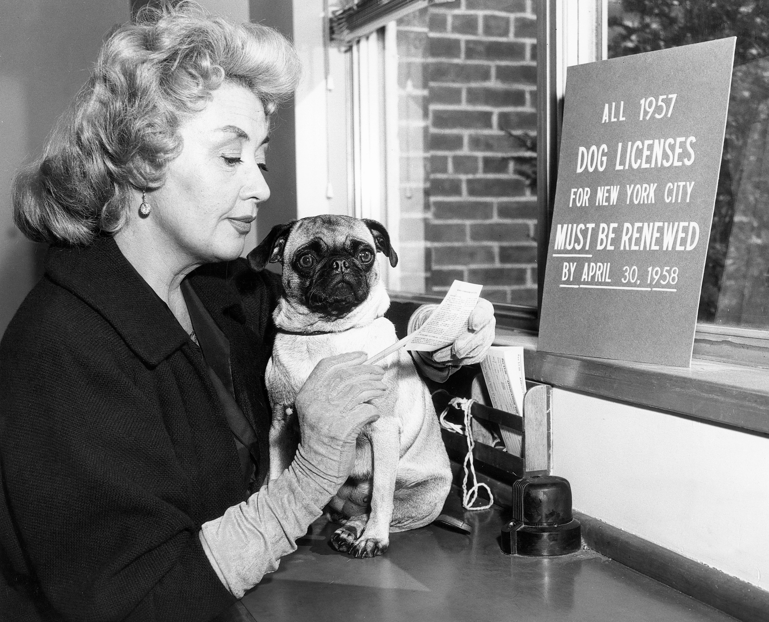 Actress Joan Blondell and her pug promote dog licensing for the ASPCA, 1958.