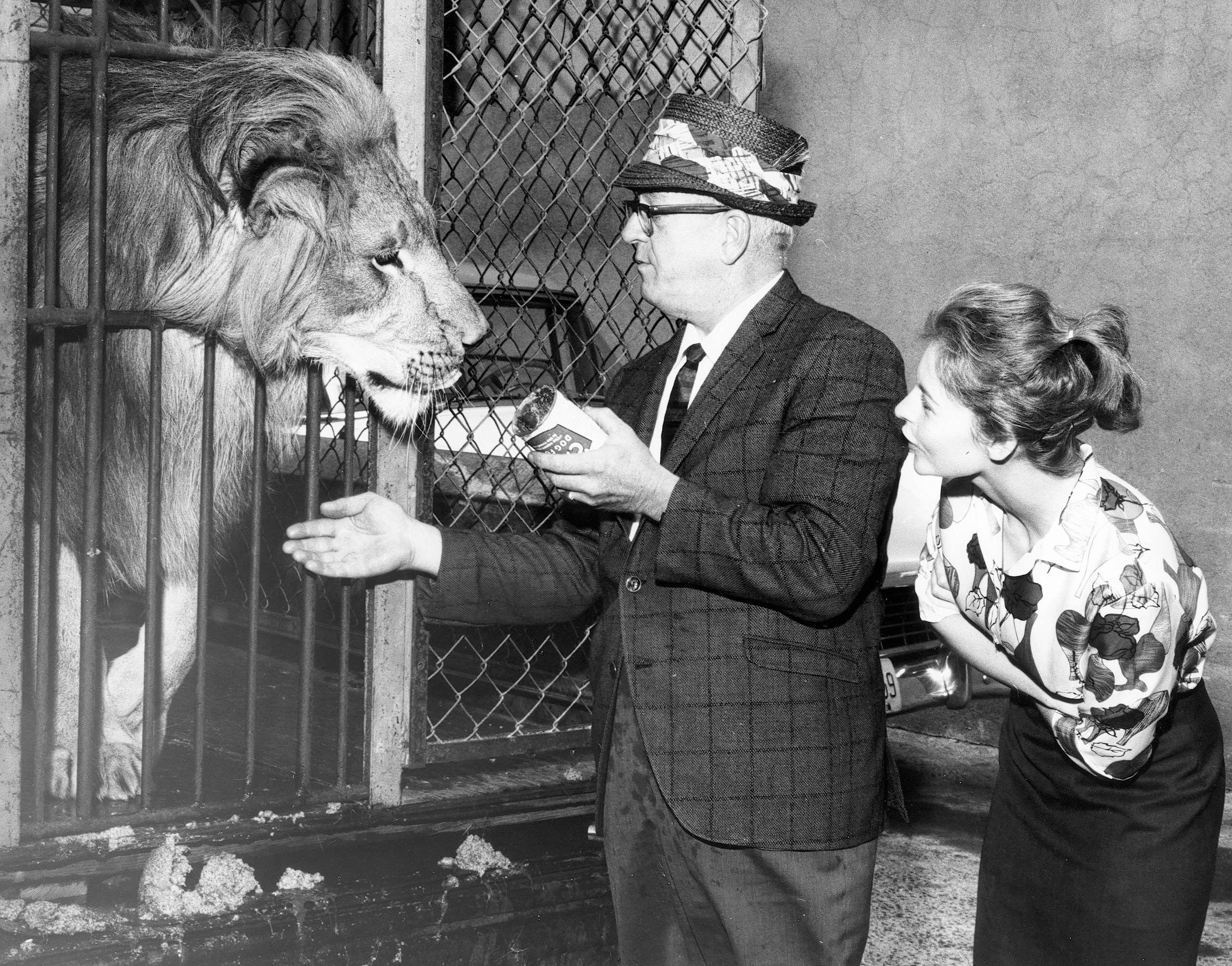 Circus lion gets a visit at the ASPCA Animal Port at Idlewild (John F. Kennedy) Airport, 1960s.