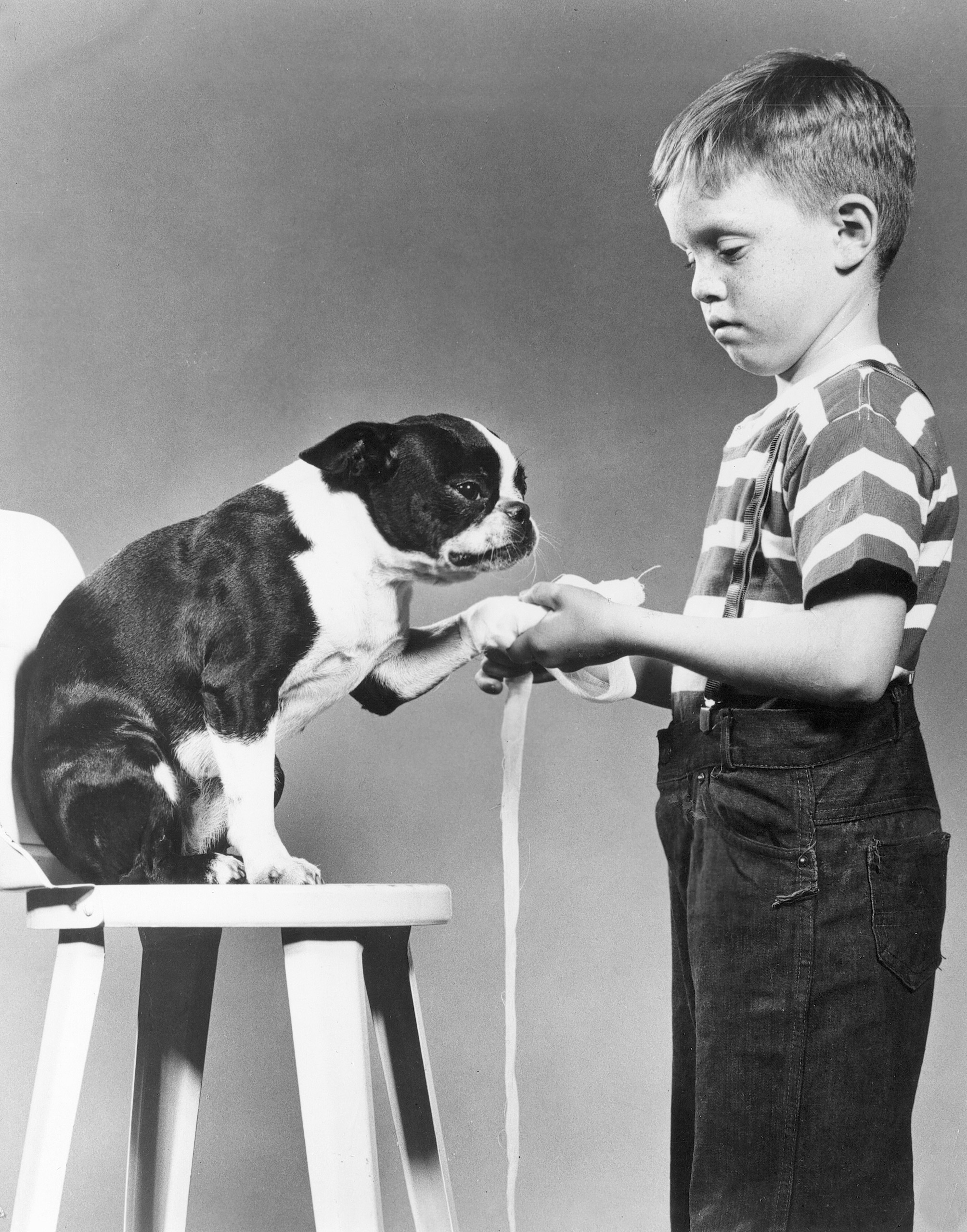 Boy in ASPCA humane education class learning to bandage a dog, 1950s.