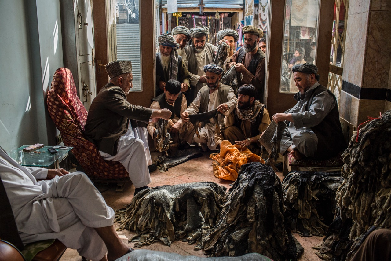 Sayed Mohammad Sultani, left, examines pelts brought in by middle men who procure them from shepherds in Northern Afghanistan. Mazar-e-Sharif, Afghanistan, 2015.