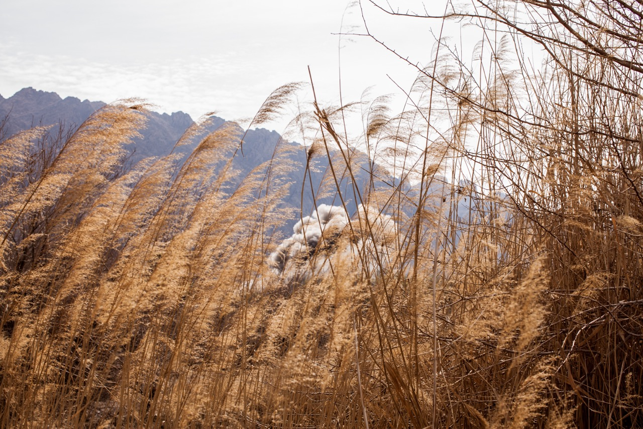 The smoke from a controlled detonation of an improvised explosive can be seen through tall grass in a hamlet in Kakeran, Afghanistan, where US and Afghan forces conduct a joint clearing operation.