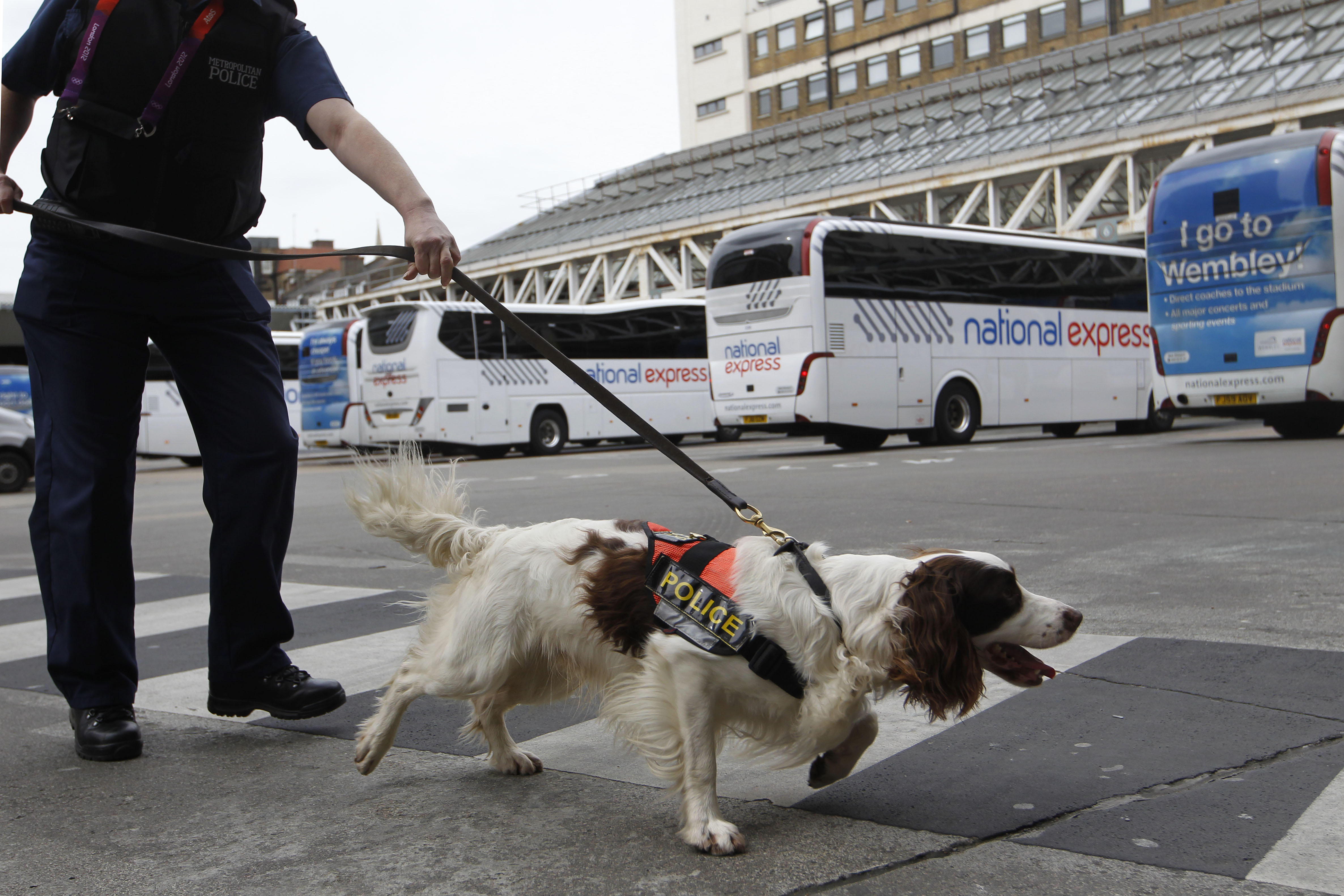 Metropolitan specialist dog 'Chester' walks across the coach station in between sniffing luggage in the run up to the London 2012 Olympic Games at Victoria Coach Station on July 12, 2012