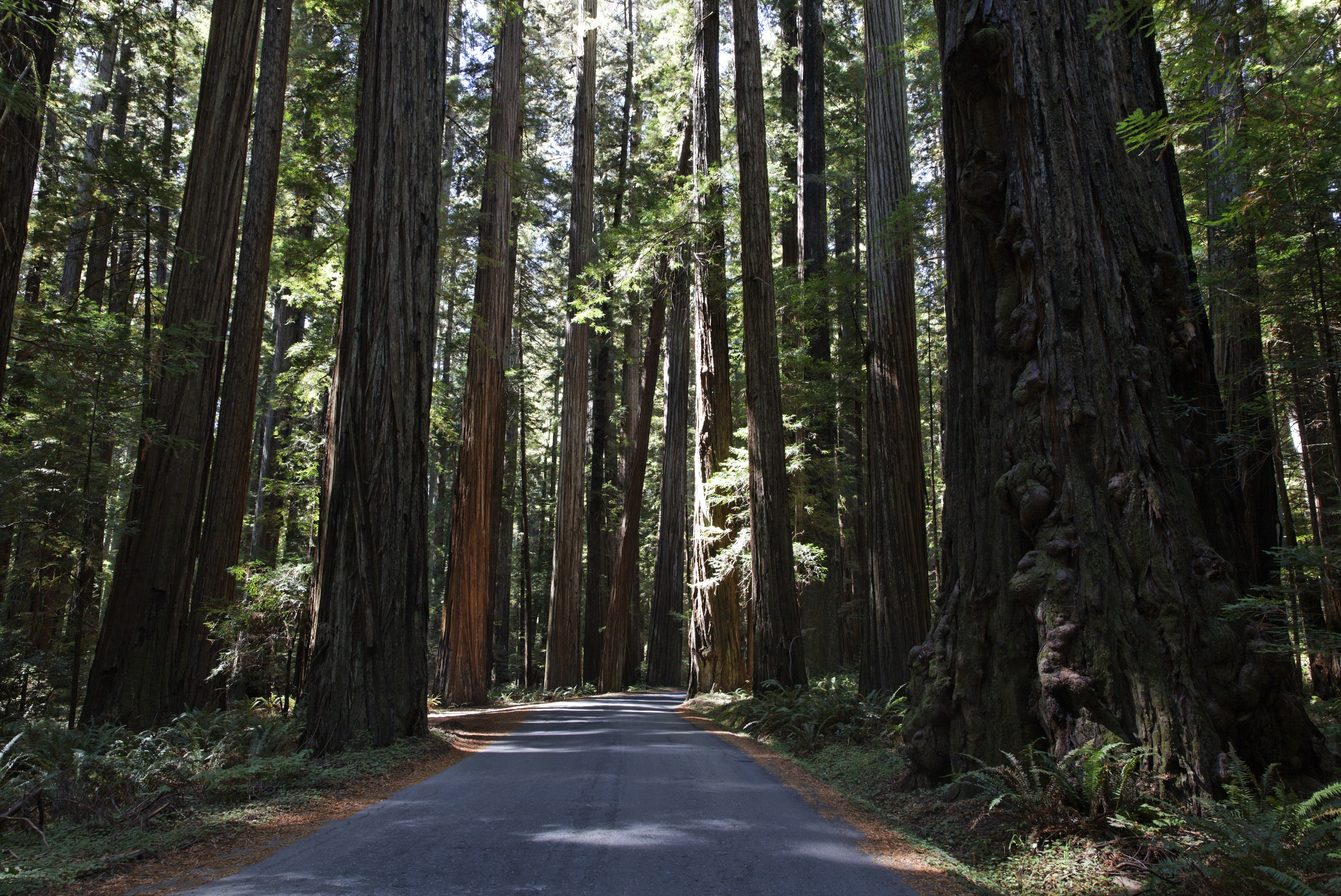 Road through Humboldt Redwoods State Park, in California's Humboldt County, on Sept. 1, 2011