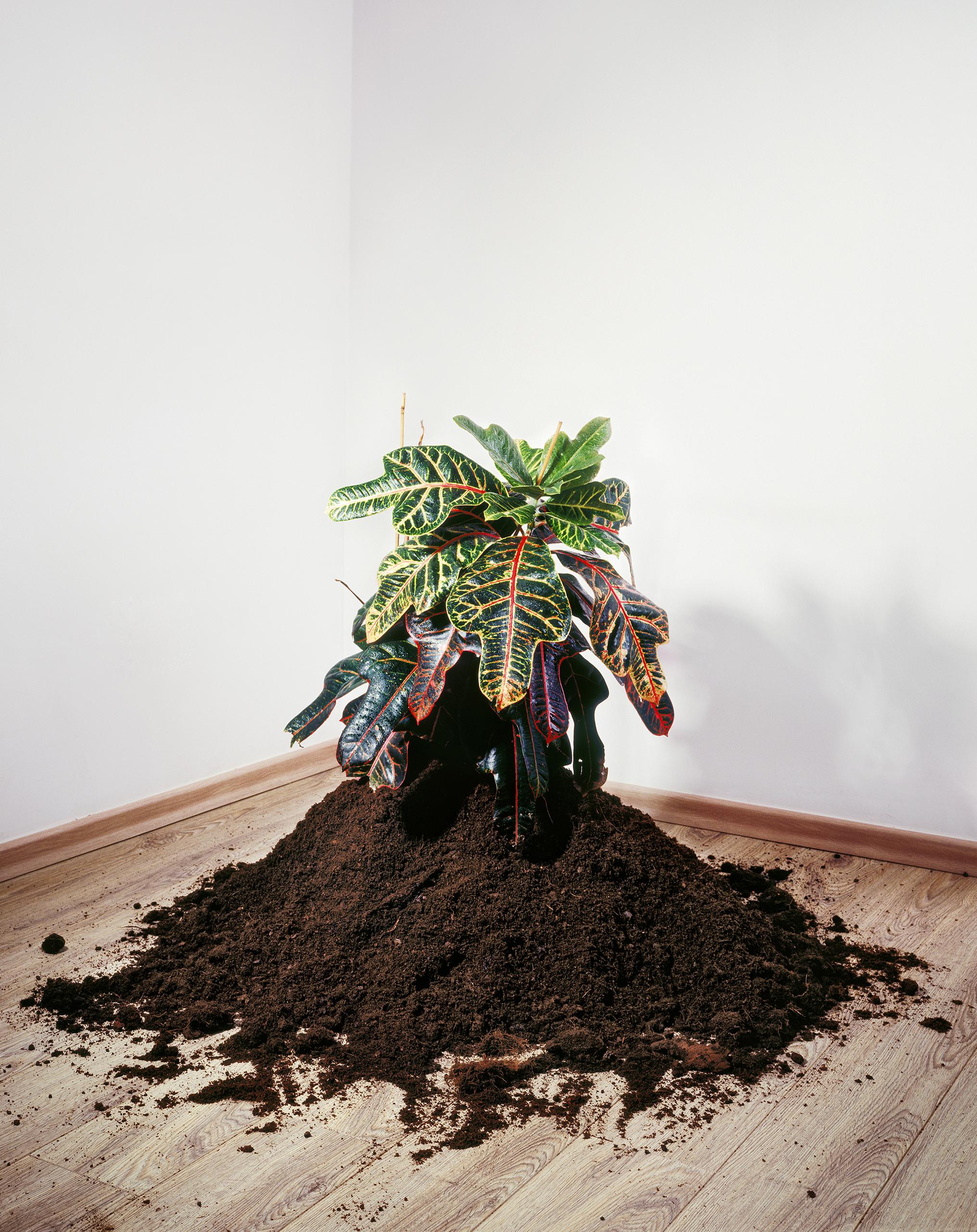 Plant (2008)