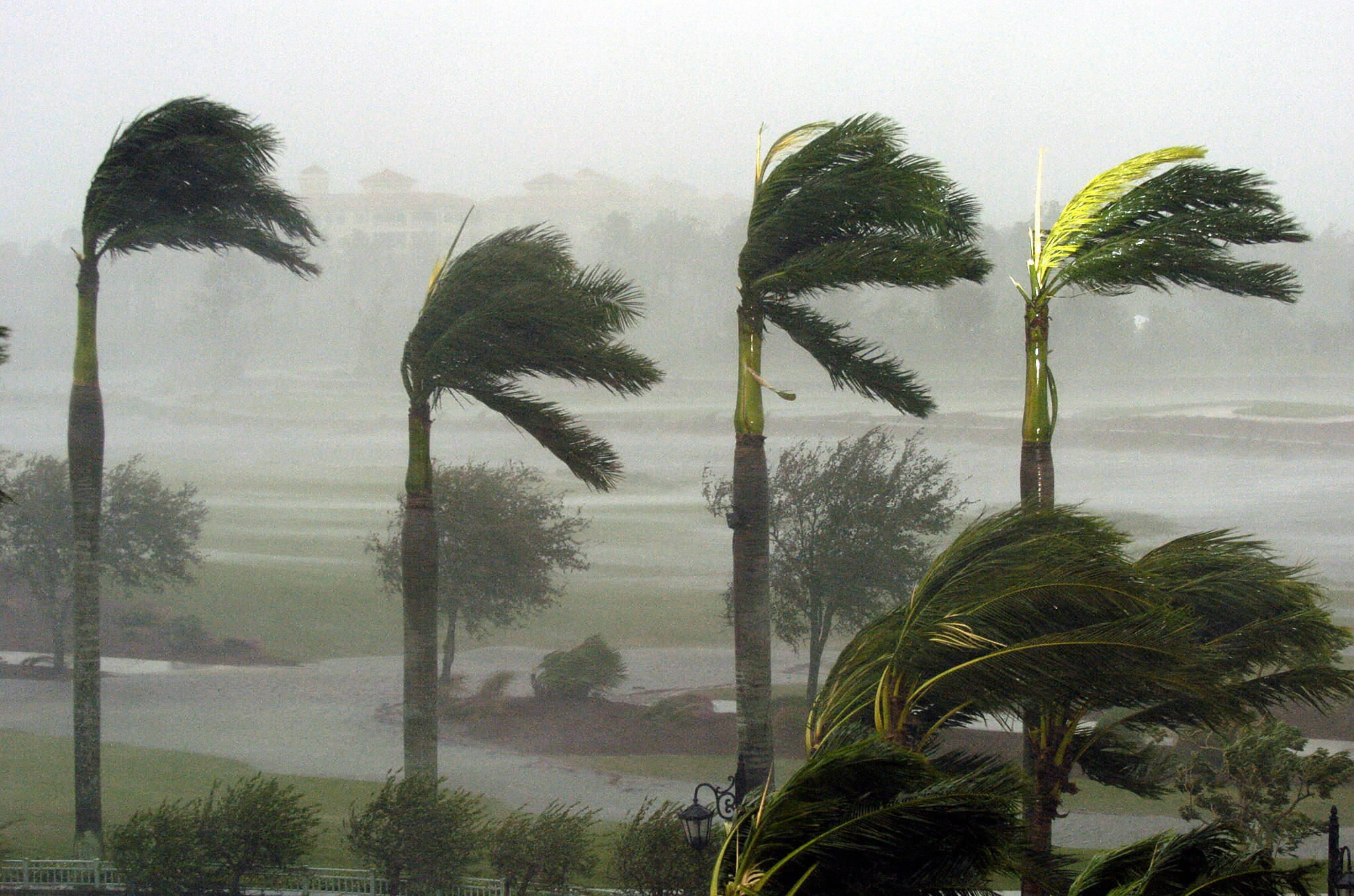 Palm trees at a hotel bend in the fierce winds as Hurricane Wilma slams into Naples, Florida on  24 Oct., 2005.