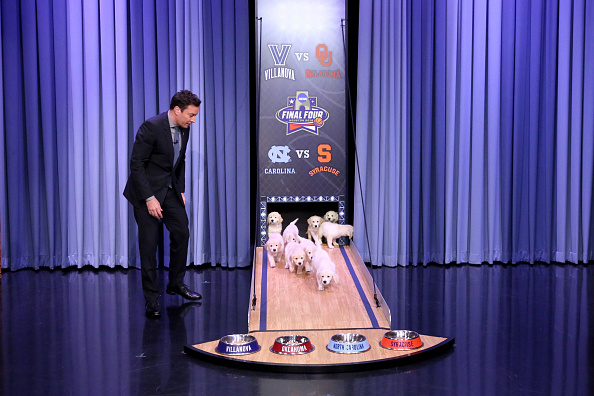 Jimmy Fallon introduces puppies to predict the NCAA Final Four outcome during an episode of  The Tonight Show  on April 1.