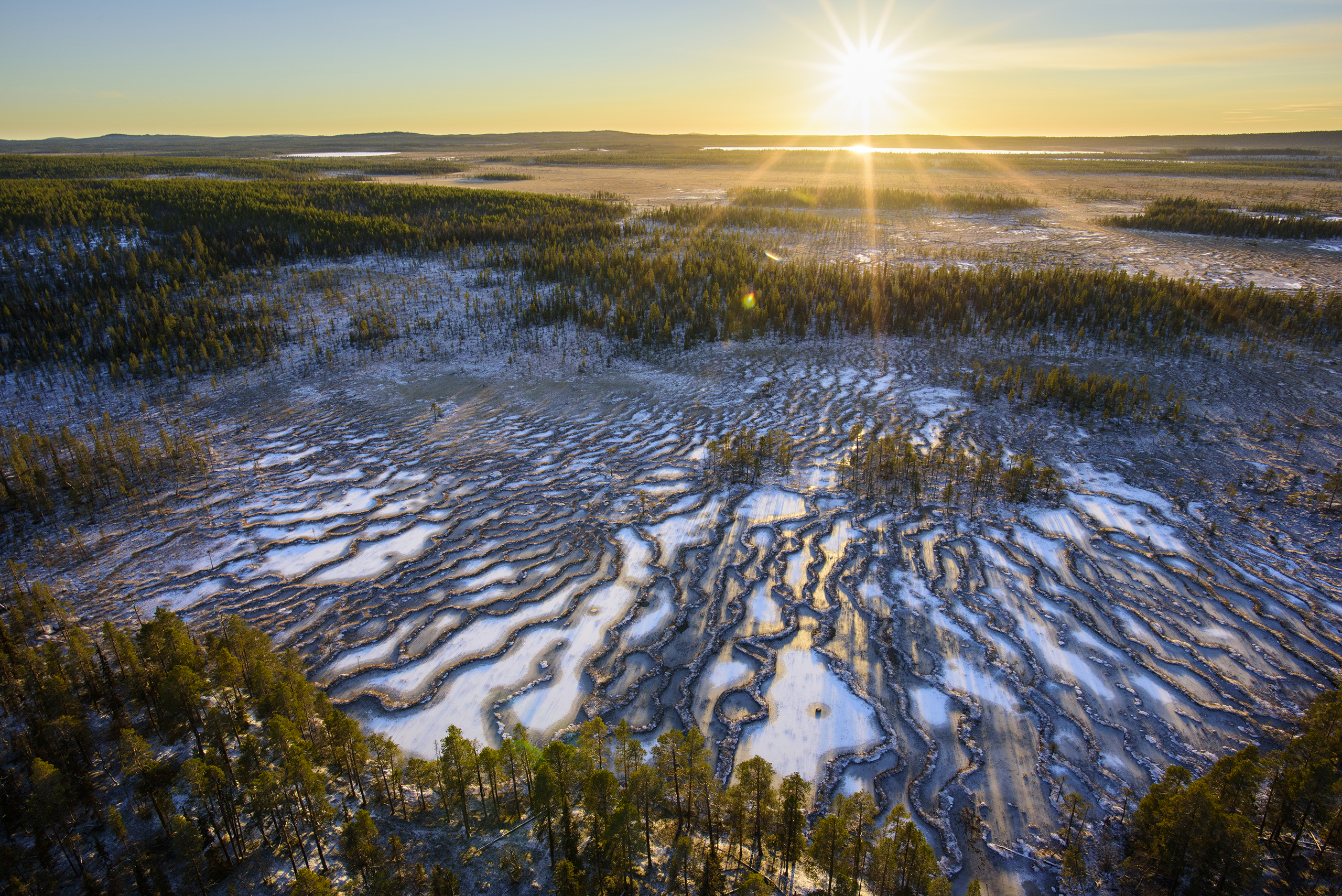 Muddus National Park, Sweden. This park in the Lapland province of northern Sweden is home to old-growth forests, bogs, ravines, and Sweden's oldest known pine tree.