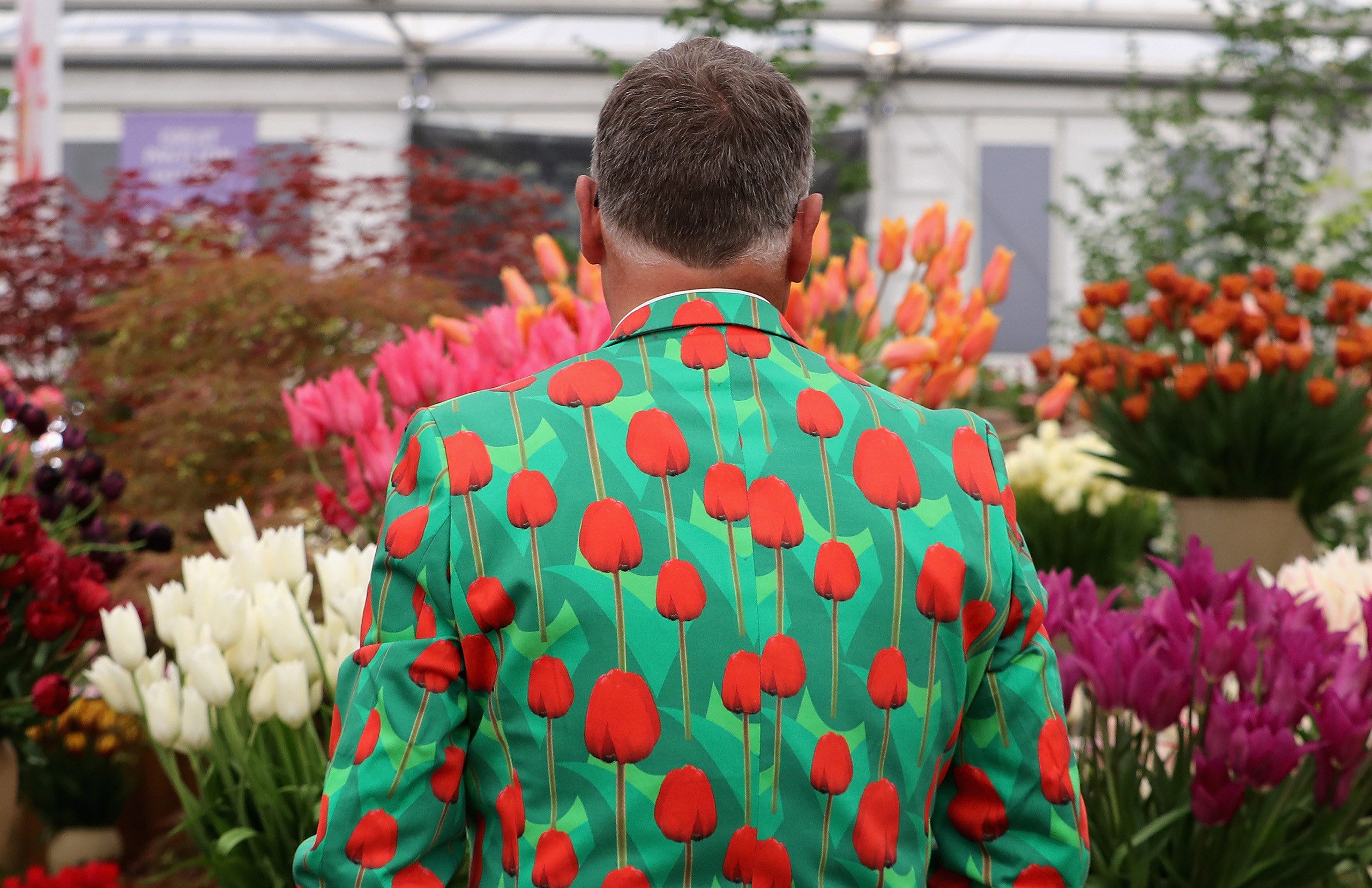 A man waters tulips in a tulip suit at the RHS at the Chelsea Flower Show in London on May 23, 2016.