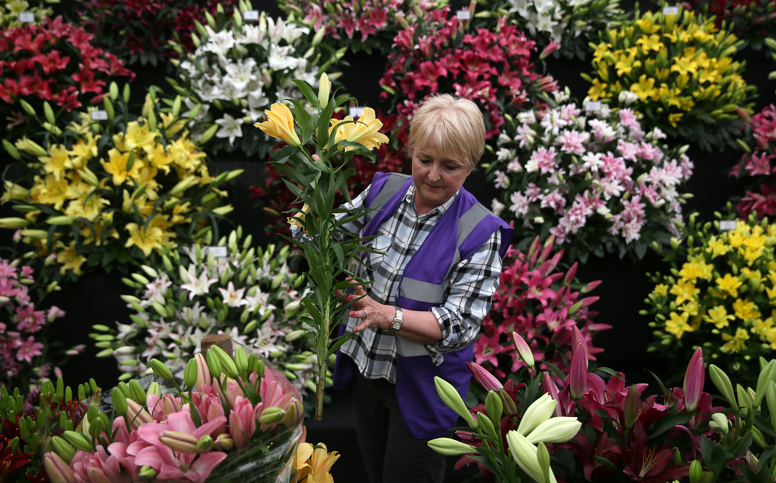 A woman arranges a display of lillies during preparations for the RHS Chelsea Flower Show in London, May 21, 2016.