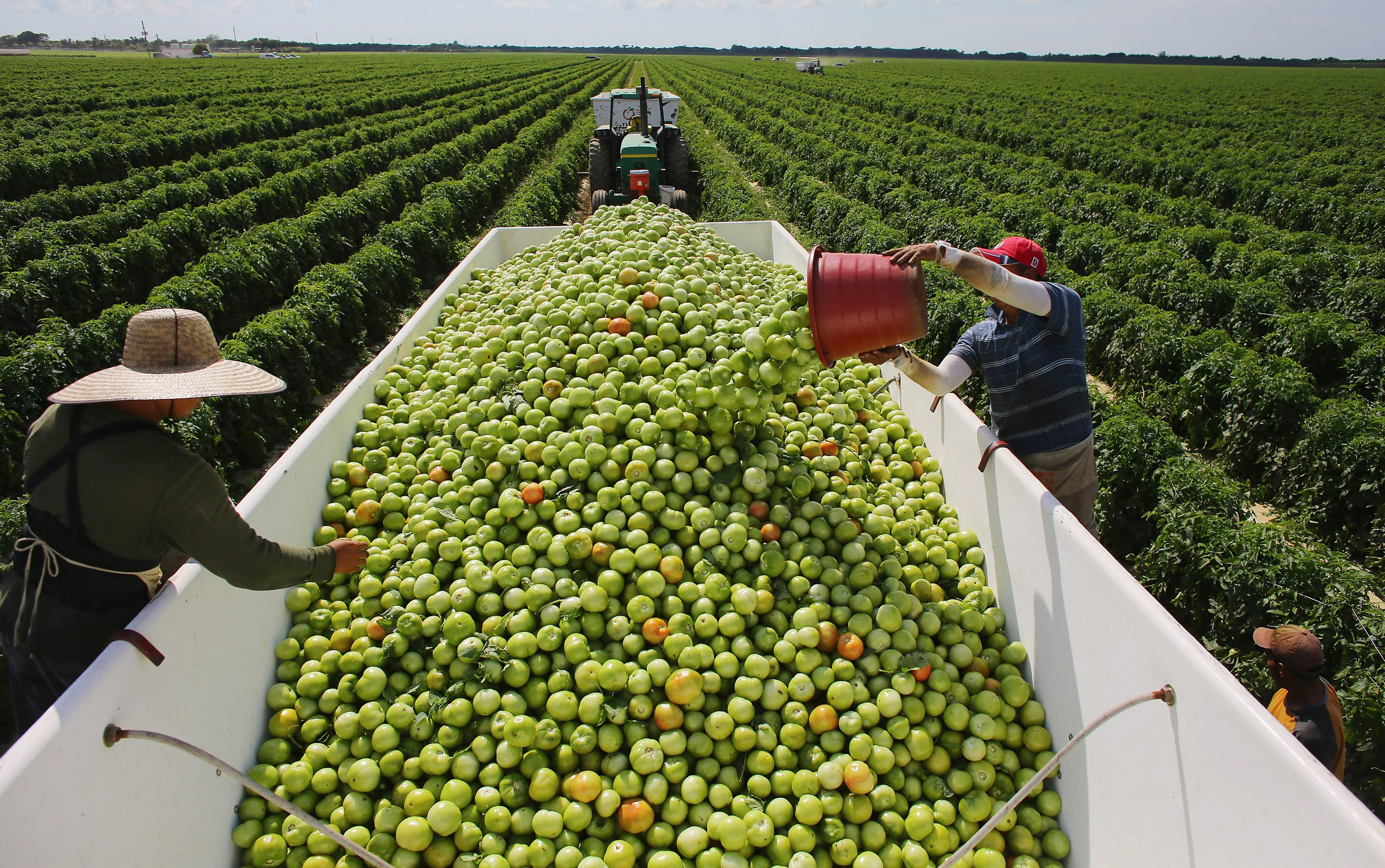 Workers fill a trailer with tomatoes, in Florida, on Feb. 6, 2013.