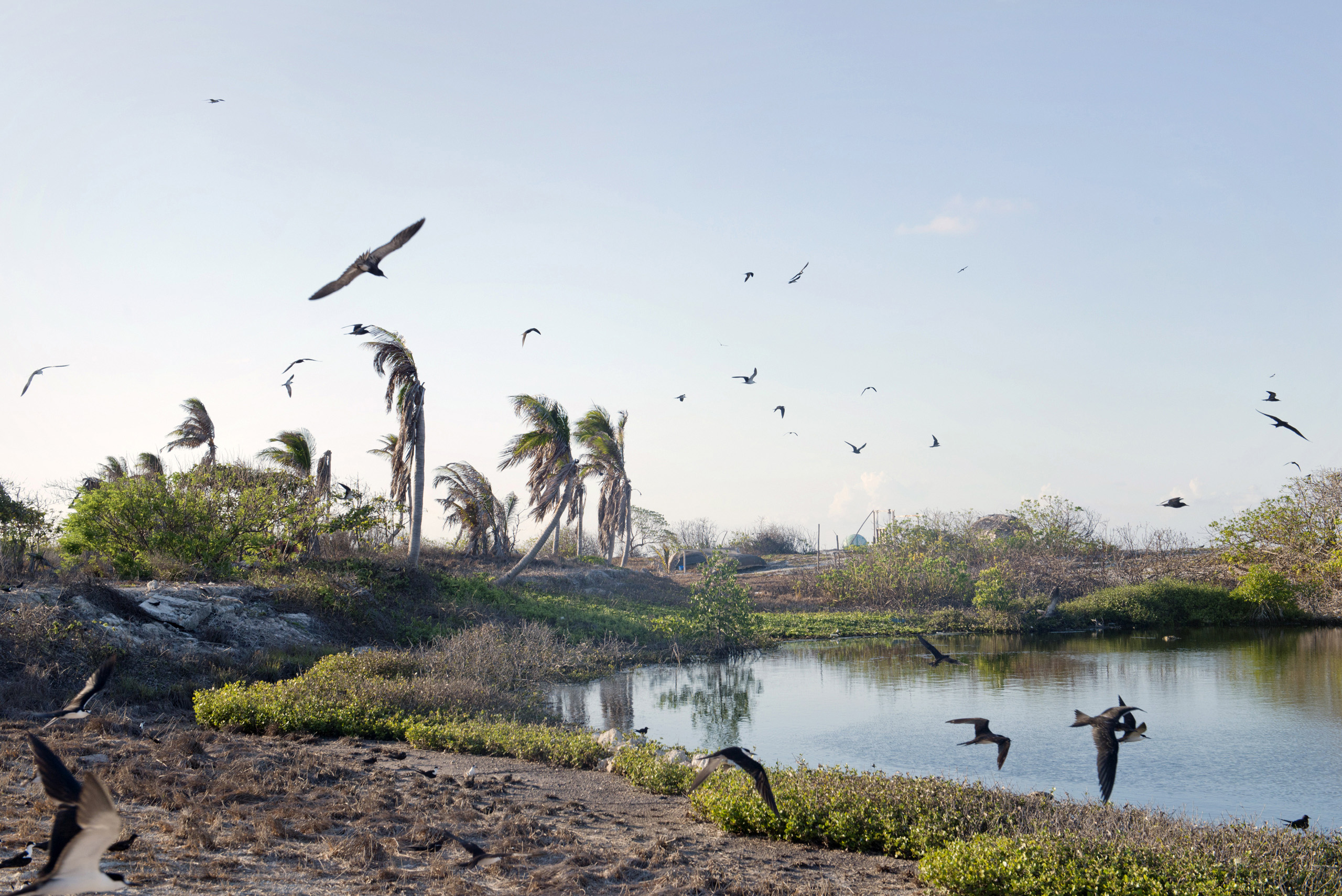 Birds on Nanshan Island, May 8, 2016.