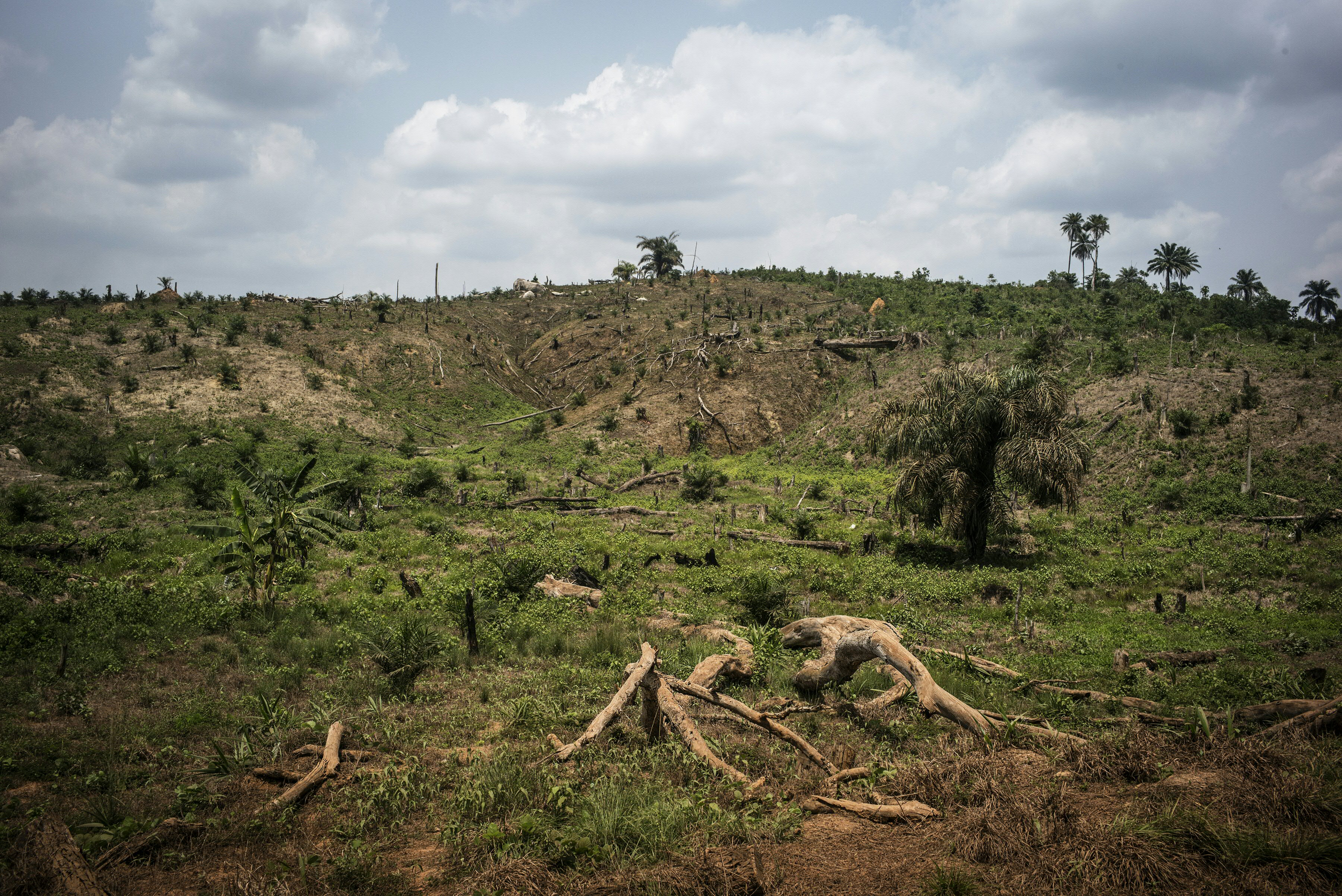 A picture taken on April 28, 2016 shows broken trees due to the intense deforestation intended for land clearing for palm oil production in Lofa county, northern Liberia