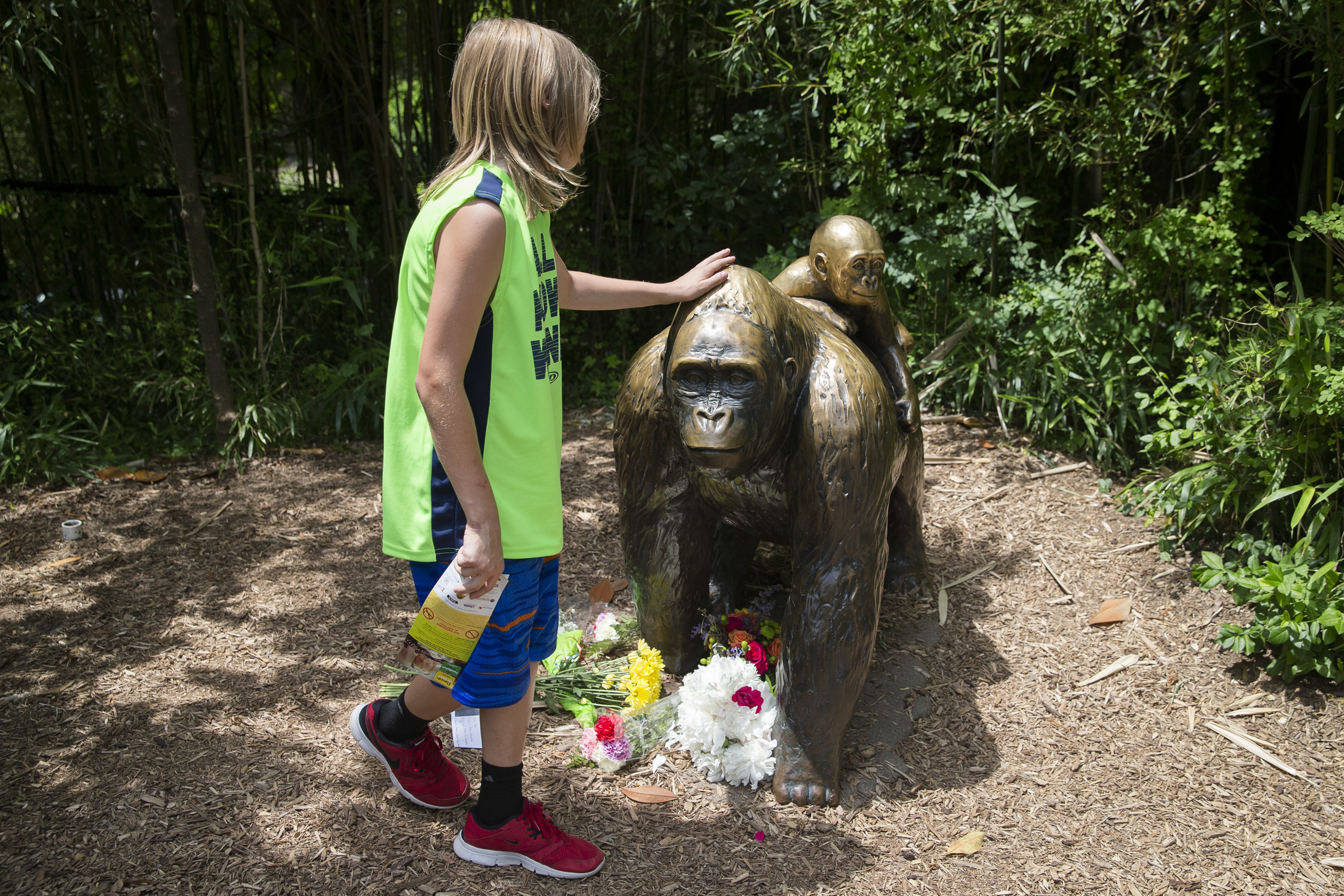A child touches the head of a gorilla statue where flowers have been placed outside the Gorilla World exhibit at the Cincinnati Zoo & Botanical Garden in Cincinnati on May 29, 2016.