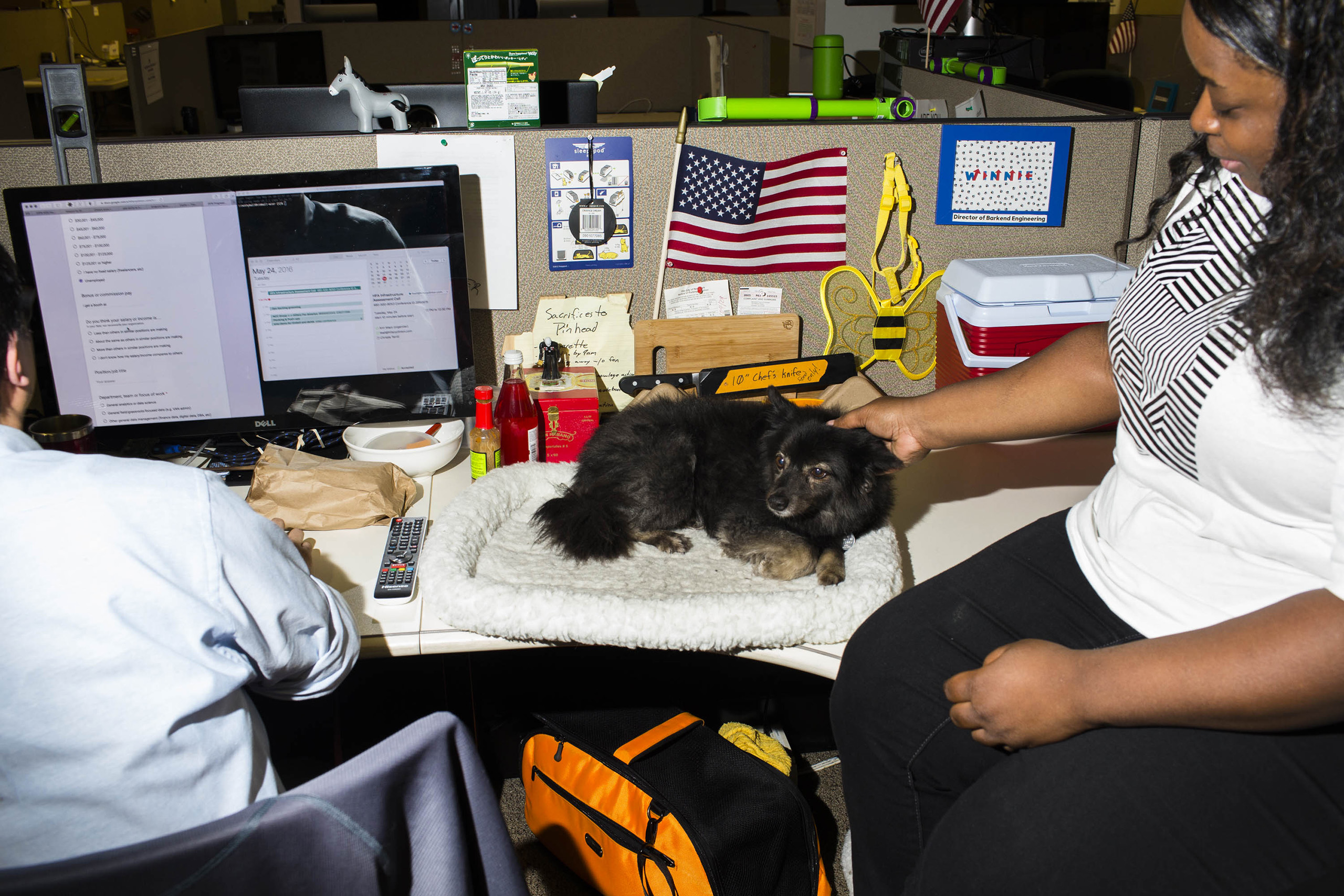 Clinton's campaign started off with just enough staffers to fill a corner of her office but has since expanded to two full floors of cubicles and shared work spaces for her army of field, data and communications aides. A dog at the campaign headquarters of Hillary Clinton on May 24, 2016, in Brooklyn, NY.
