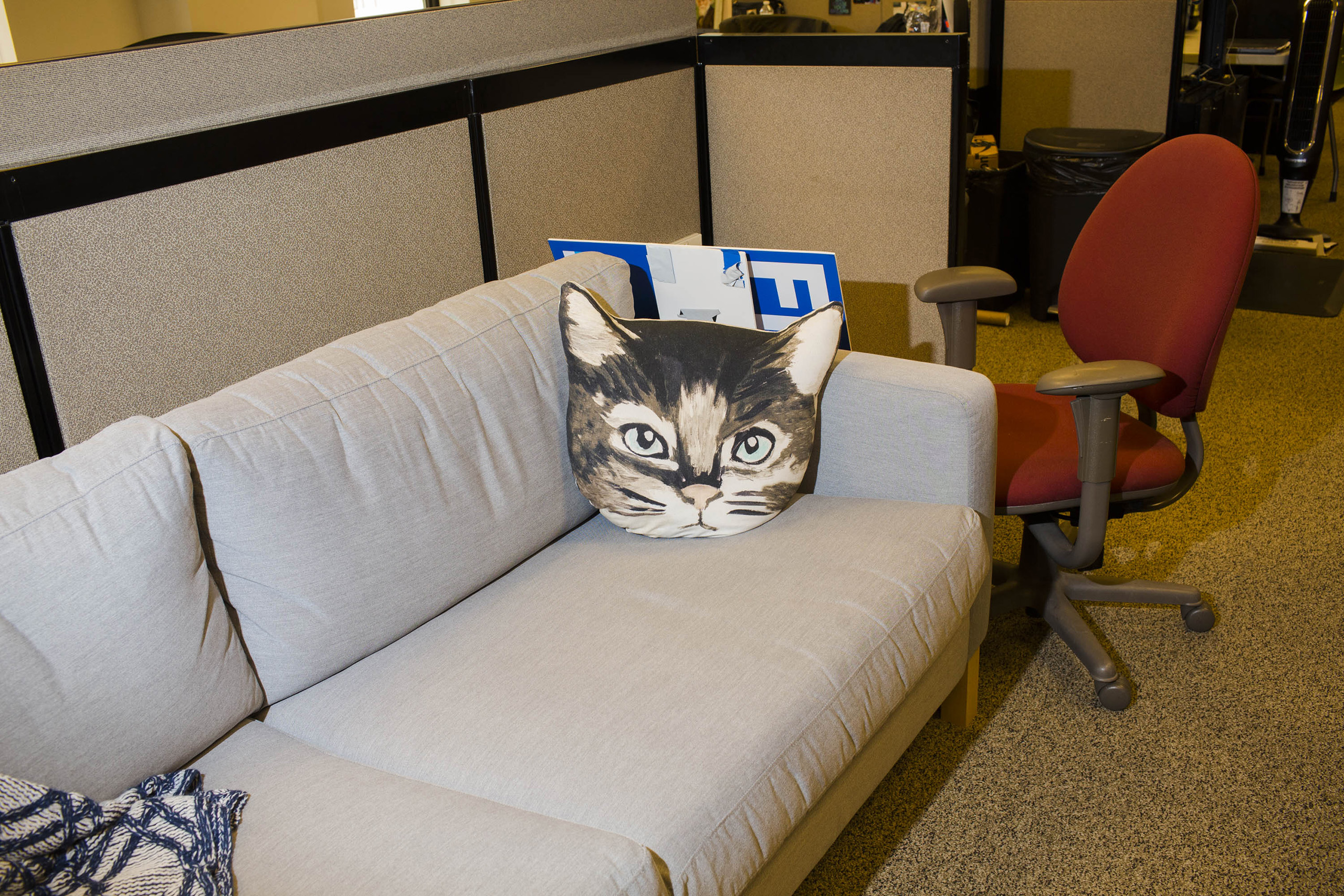 A cat pillow inside the campaign headquarters of Hillary Clinton on May 24, 2016, in Brooklyn, NY.
