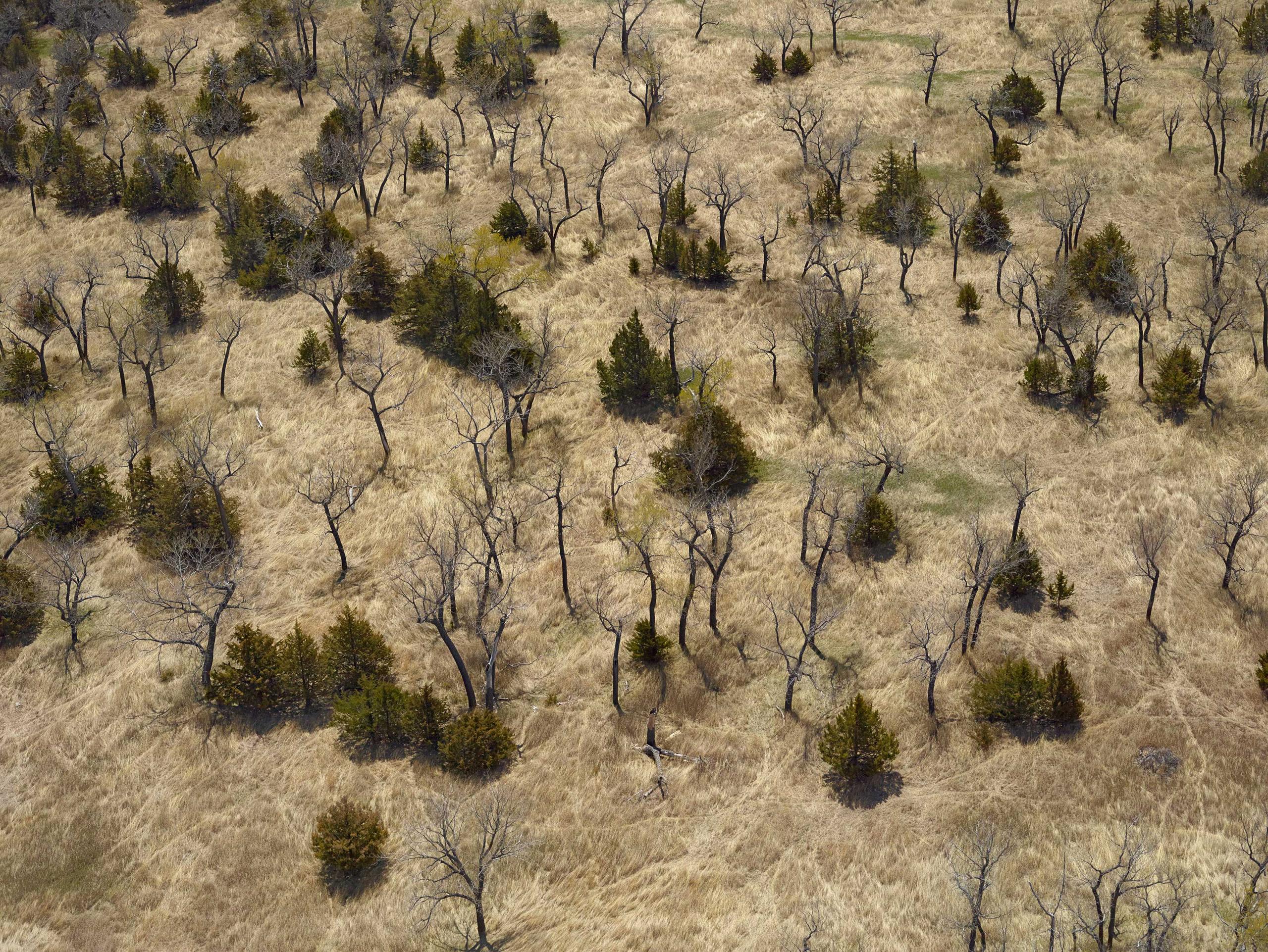 Along The Bad River. Haakon County, South Dakota, 2014.