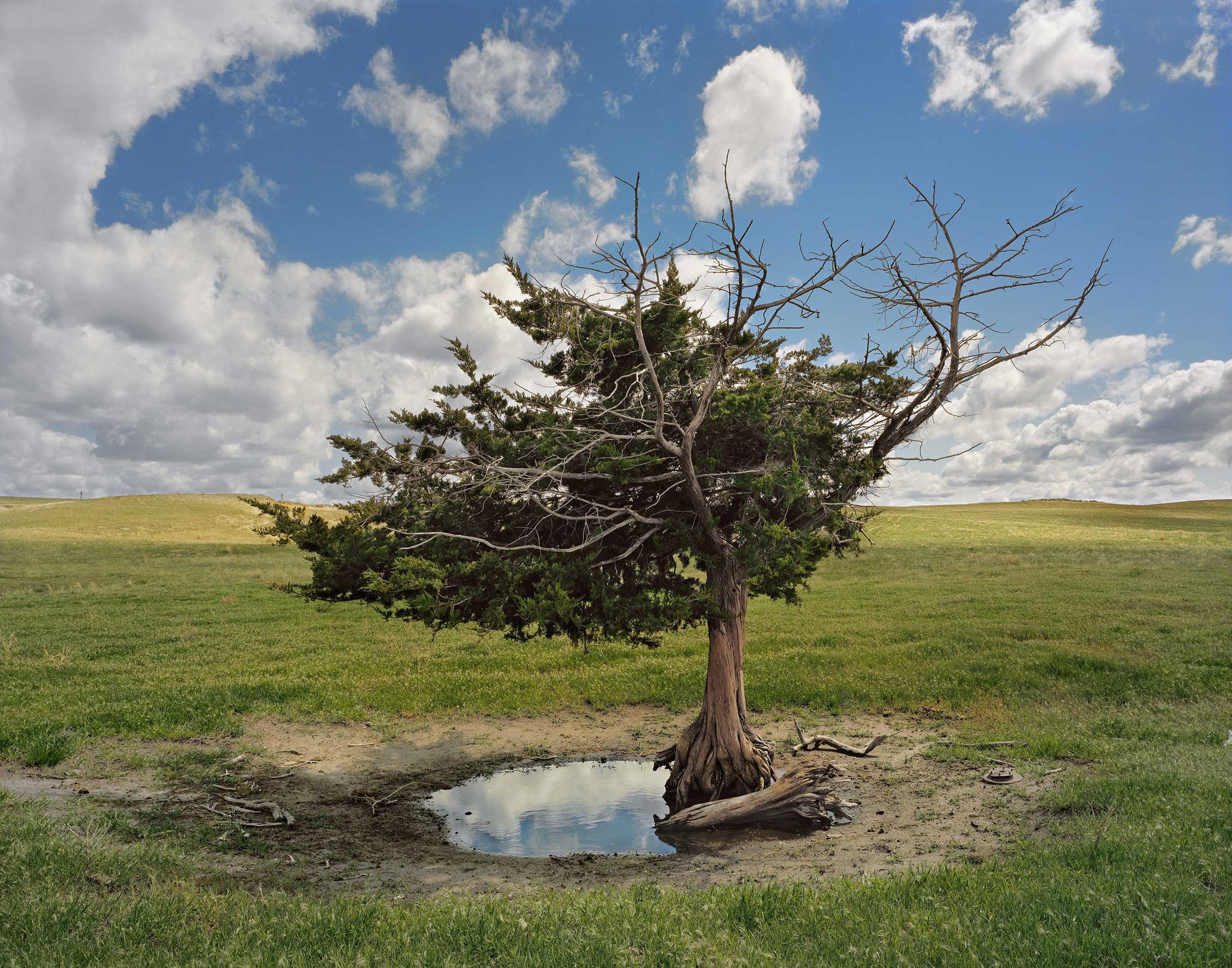 Homesteaders' Tree. Cherry County, Nebraska, 2011.