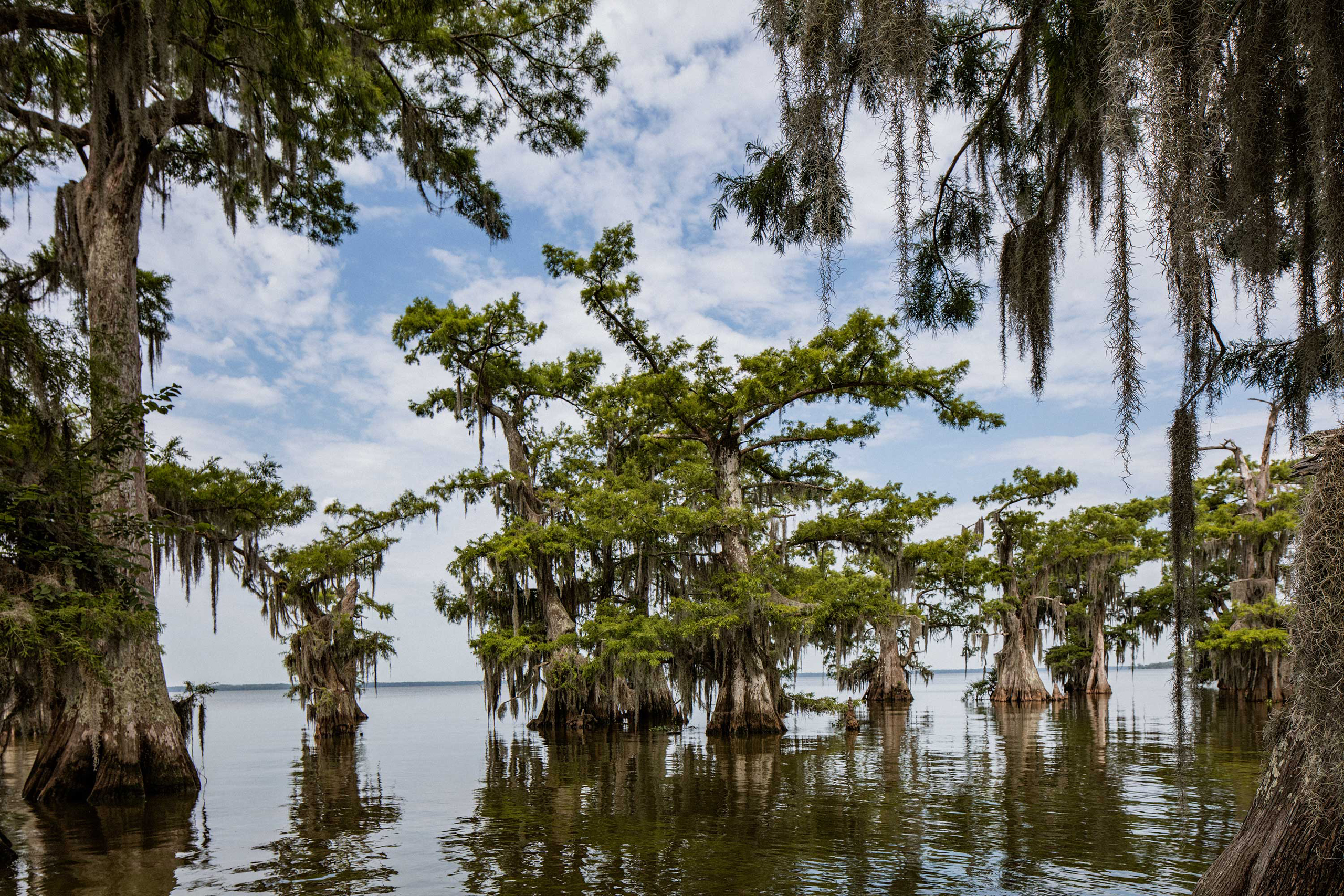 The Atchafalaya Basin, or Atchafalaya Swamp, is the largest wetland and swamp in the United States, photographed on June 9, 2016.
