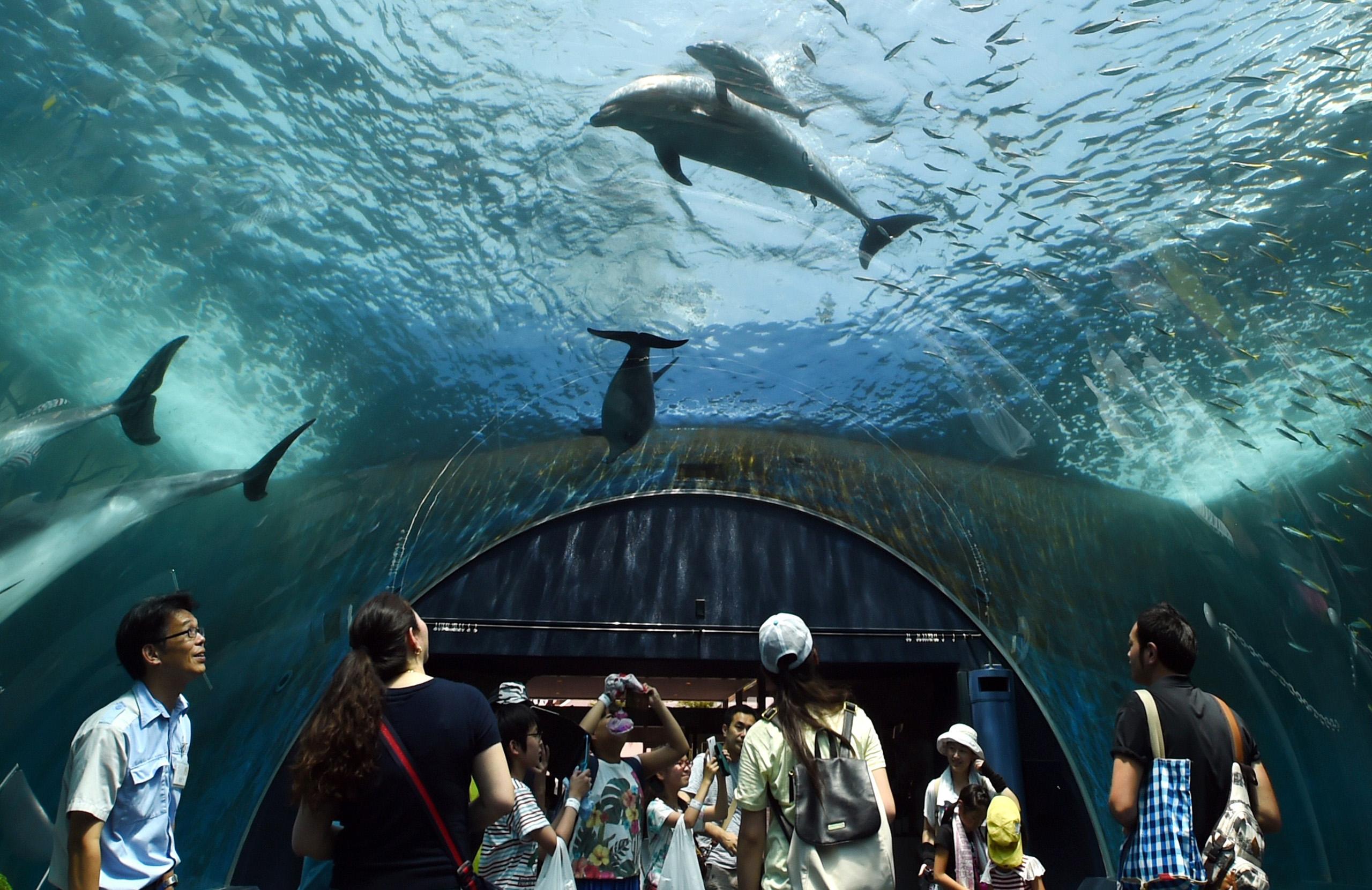 A baby bottlenose dolphin (top) swims beside his mother at the Hakkeijima Sea Paradise aquarium in Yokohama, suburban Tokyo on July 20, 2015.