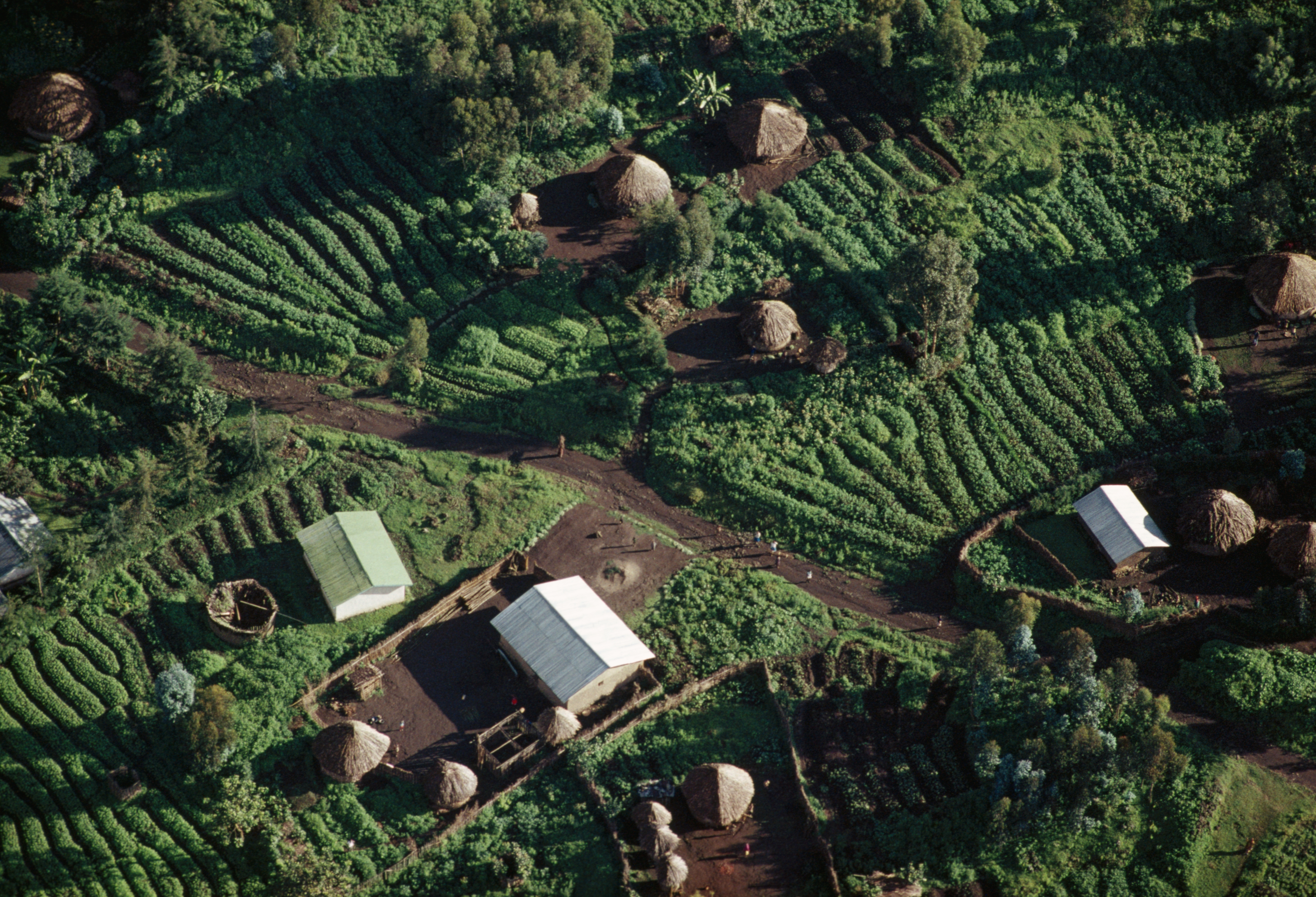 Tea plantation with houses, aerial view, Kivu region, Democratic Republic of the Congo.
