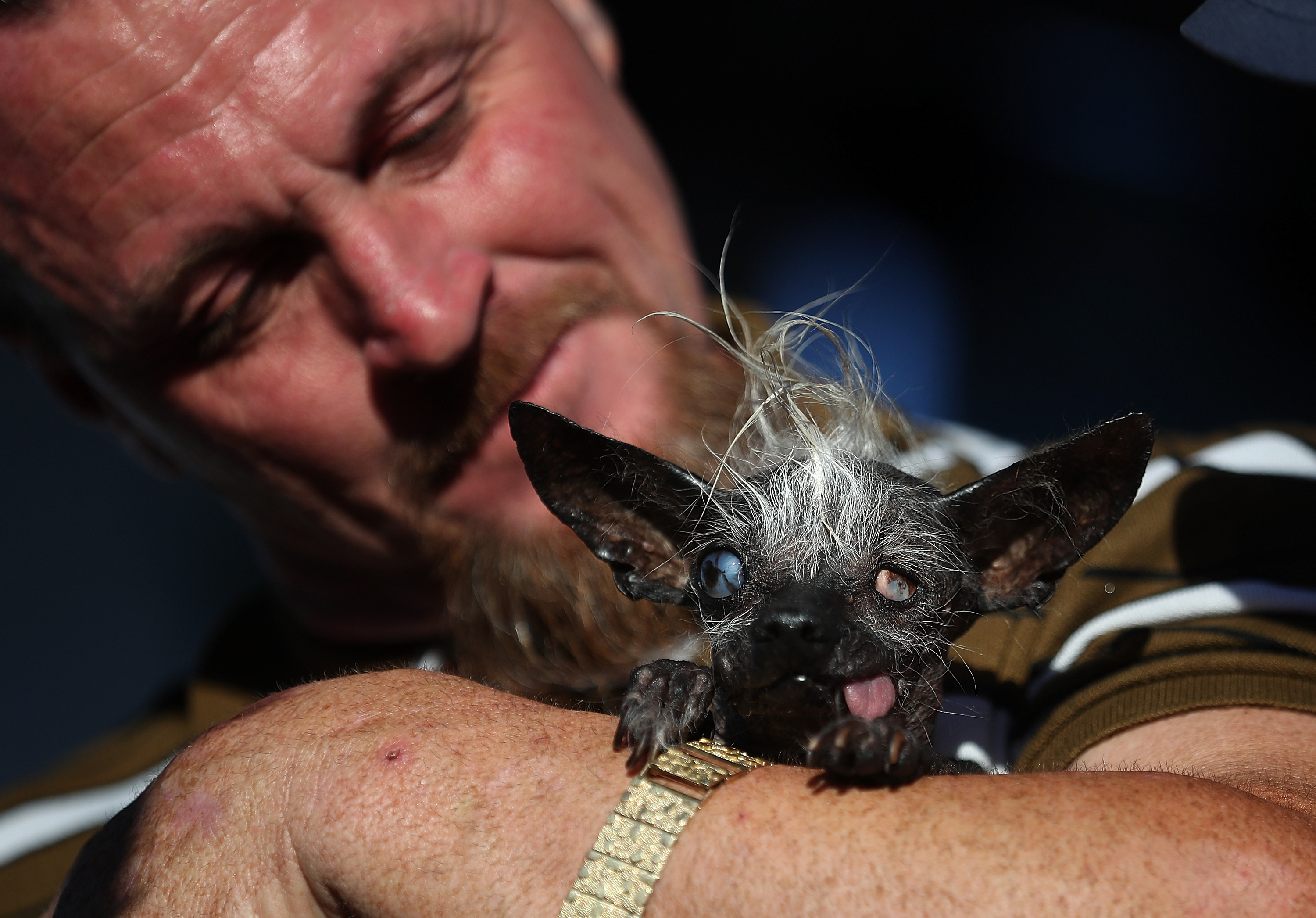 PETALUMA, CA - JUNE 24:  Jason Wurtz of Van Nuys, California, holds his dog Sweepee Rambo after winning the 2016 World's Ugliest Dog contest at the Sonoma-Marin Fair on June 24, 2016 in Petaluma, California. Sweepee Rambo, a blind Chinese Crested dog, won the annual World's Ugliest Dog contest.  (Photo by Justin Sullivan/Getty Images)