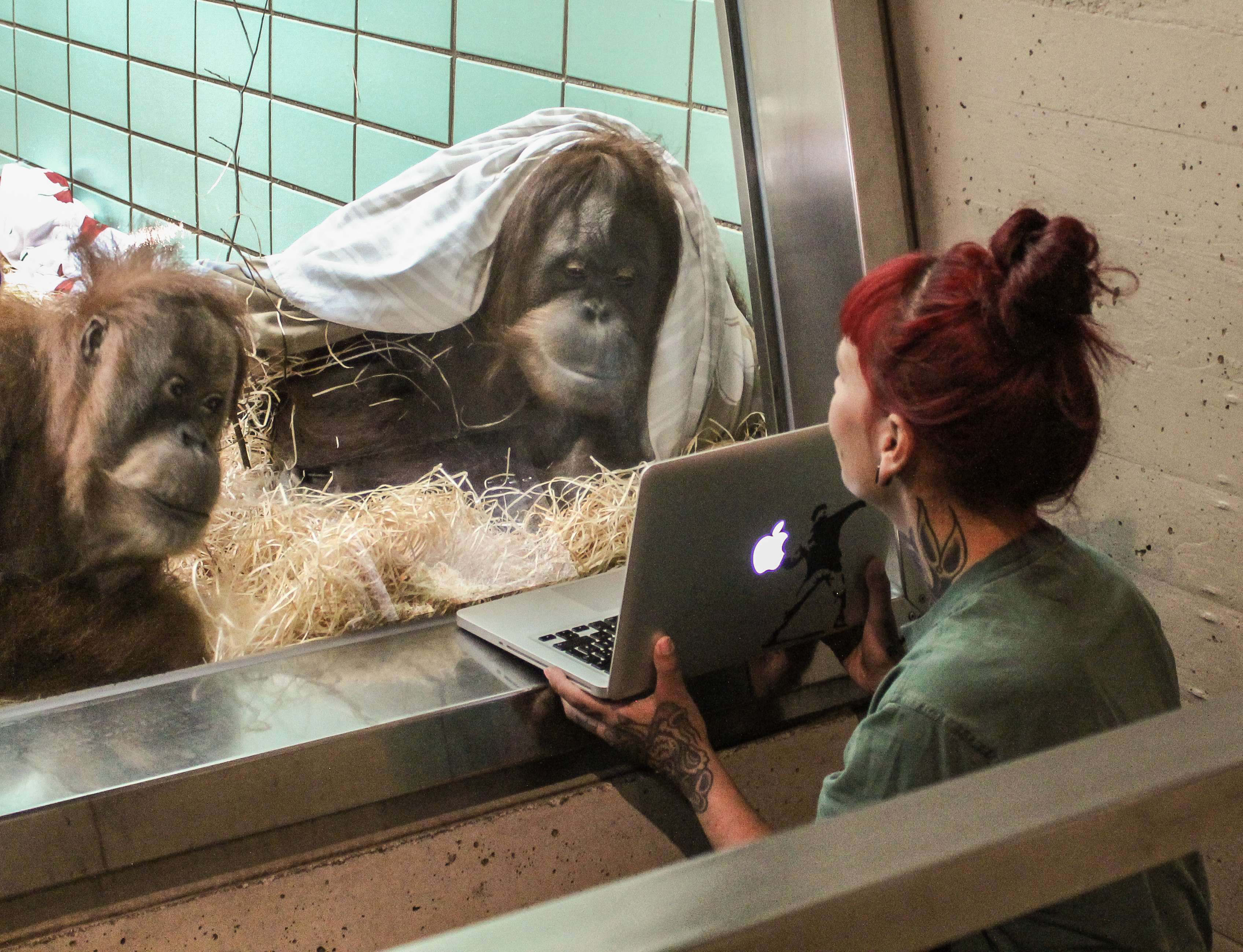 Conny, left, and Sinta, right, together watch video of Orangutan male Gempa.
