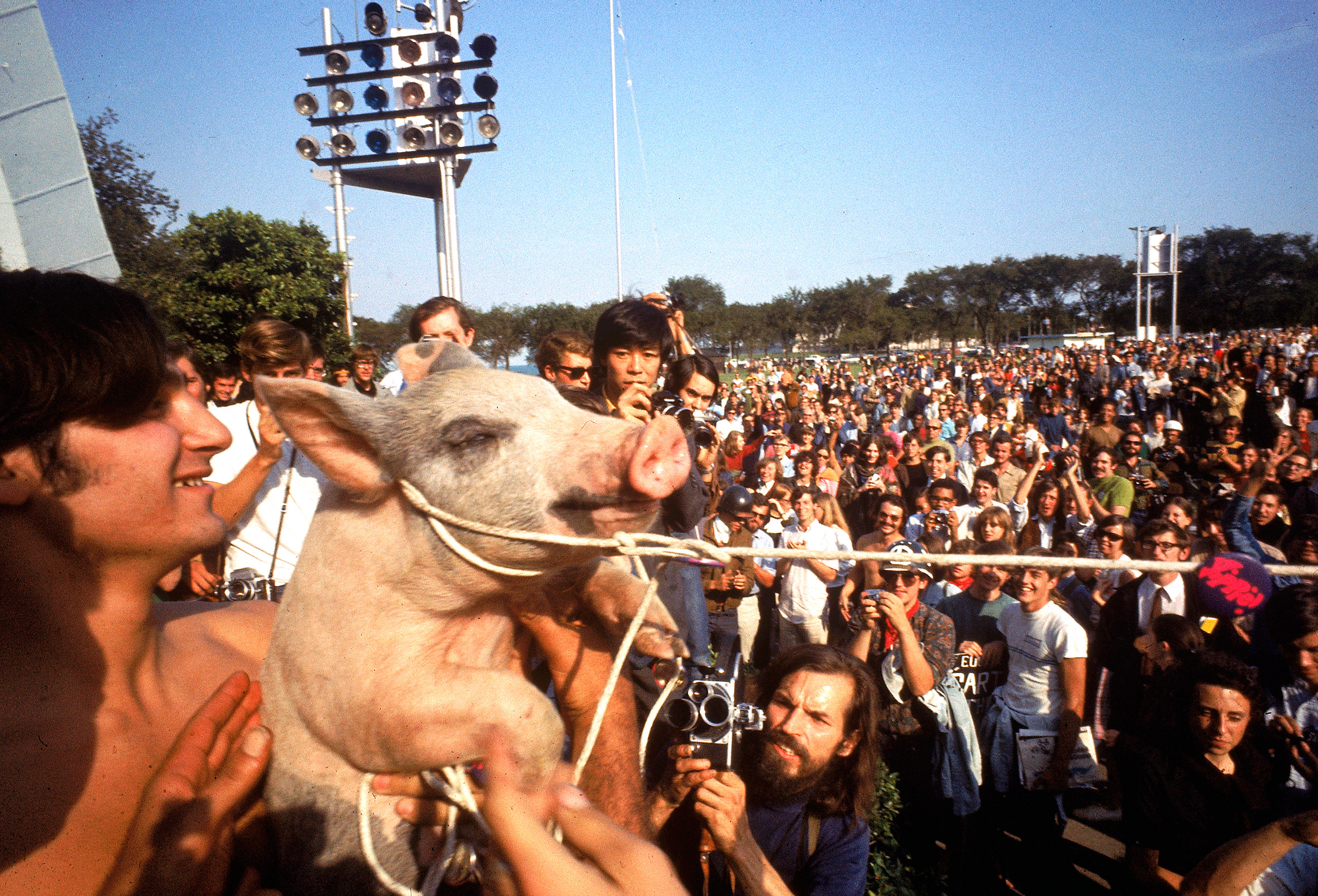 Yippies parading their Presidential candidate, Pigasus the pig, during the 1968 Democratic National Convention.