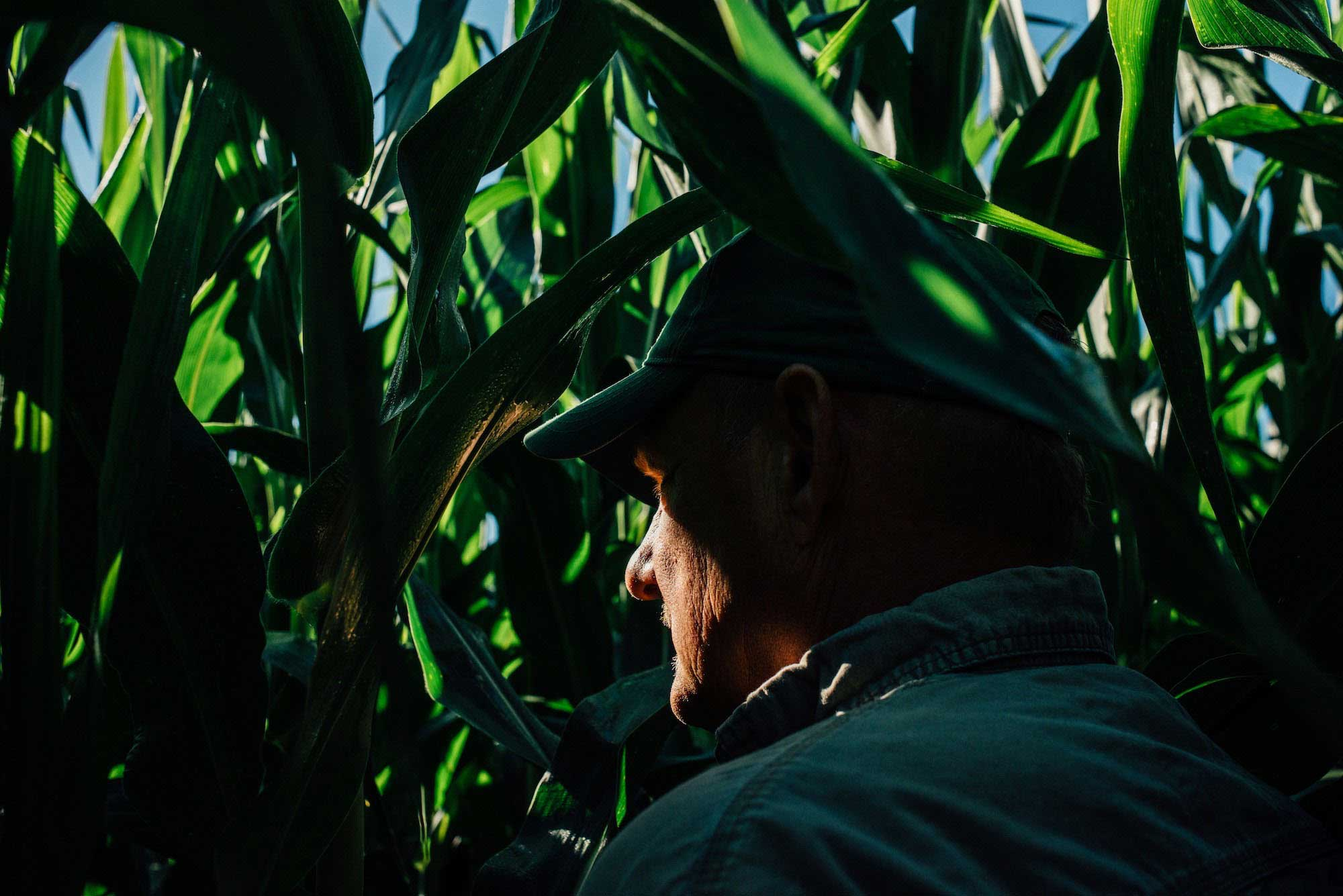 Joel Mickelson stands for a portrait in his field, where the corn is now over six feet tall.