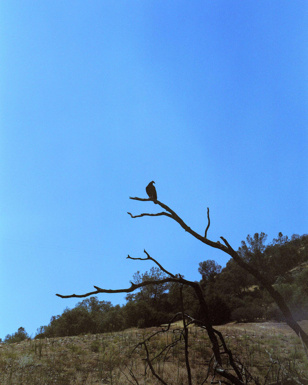 Don Pedro Reservoir, California, August 2014.
