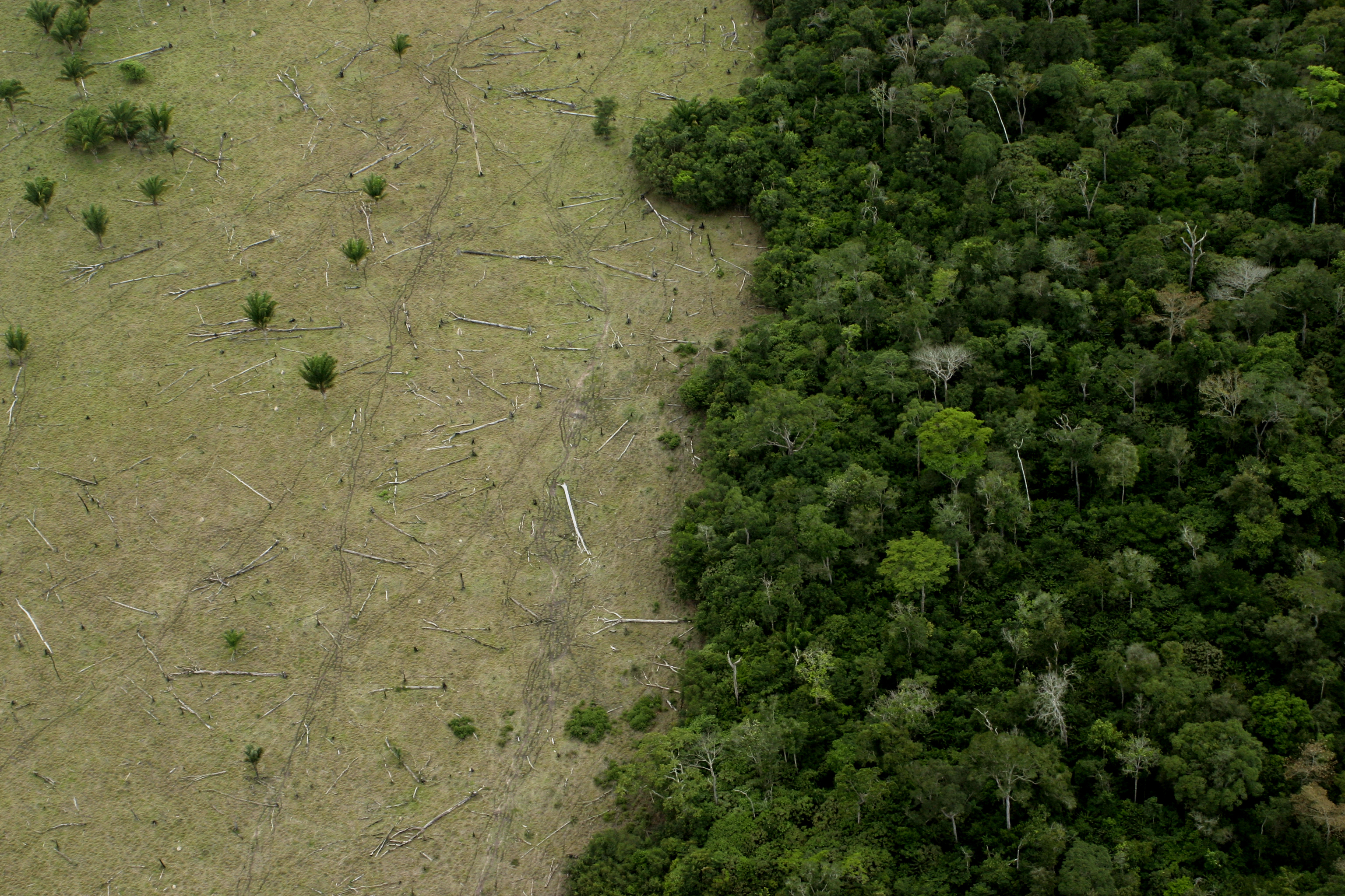 Area in Amazon Forest deforested for cattle and remaining forest