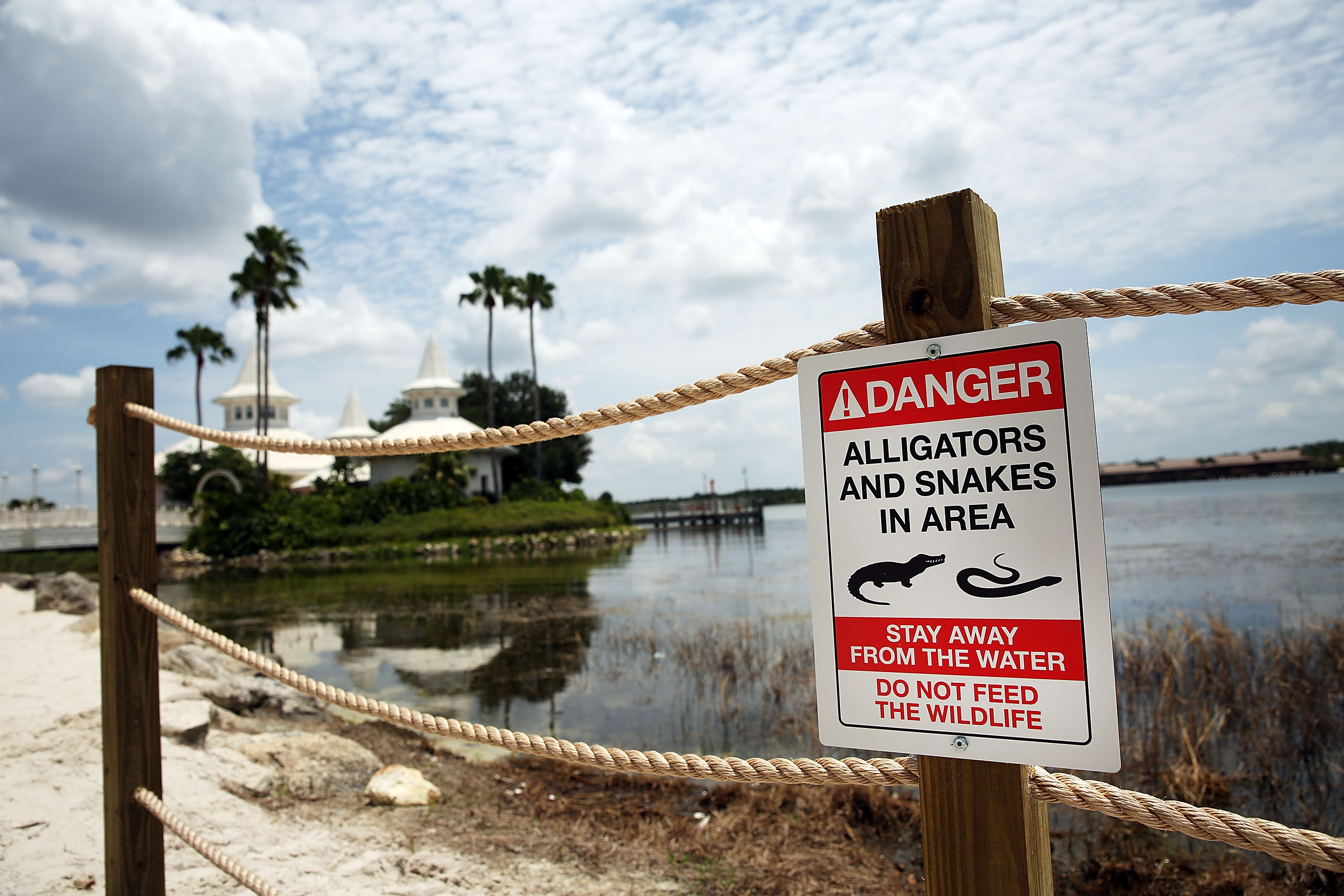 Newly installed signs warn of alligators and snakes on a closed section of beach following the death of a 2-year-old boy who was killed by an alligator near a Walt Disney World hotel on June 18, 2016 in Orlando, Florida.