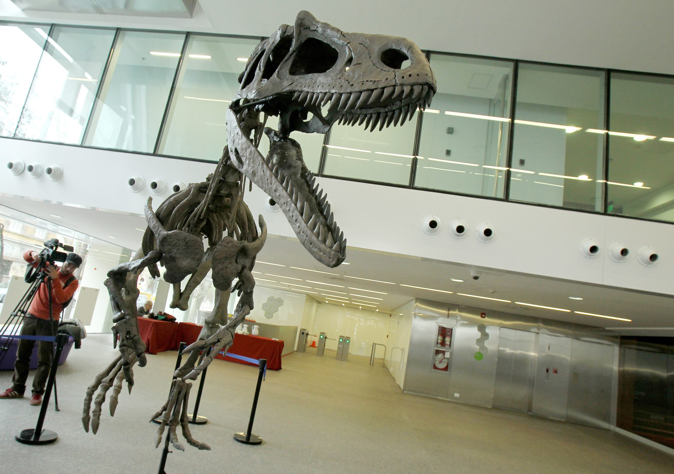 A general view of Gualicho shinyae, an unusual carnivorous dinosaur that lived at the Argentinian Patagonia during the Superior Cretacious period, presented during an event in Buenos Aires on July 13, 2016.