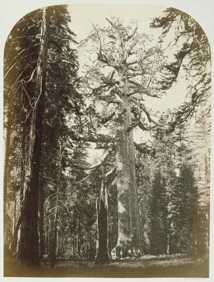 Yosemite national park photographed by Carleton Watkins in 1861.
