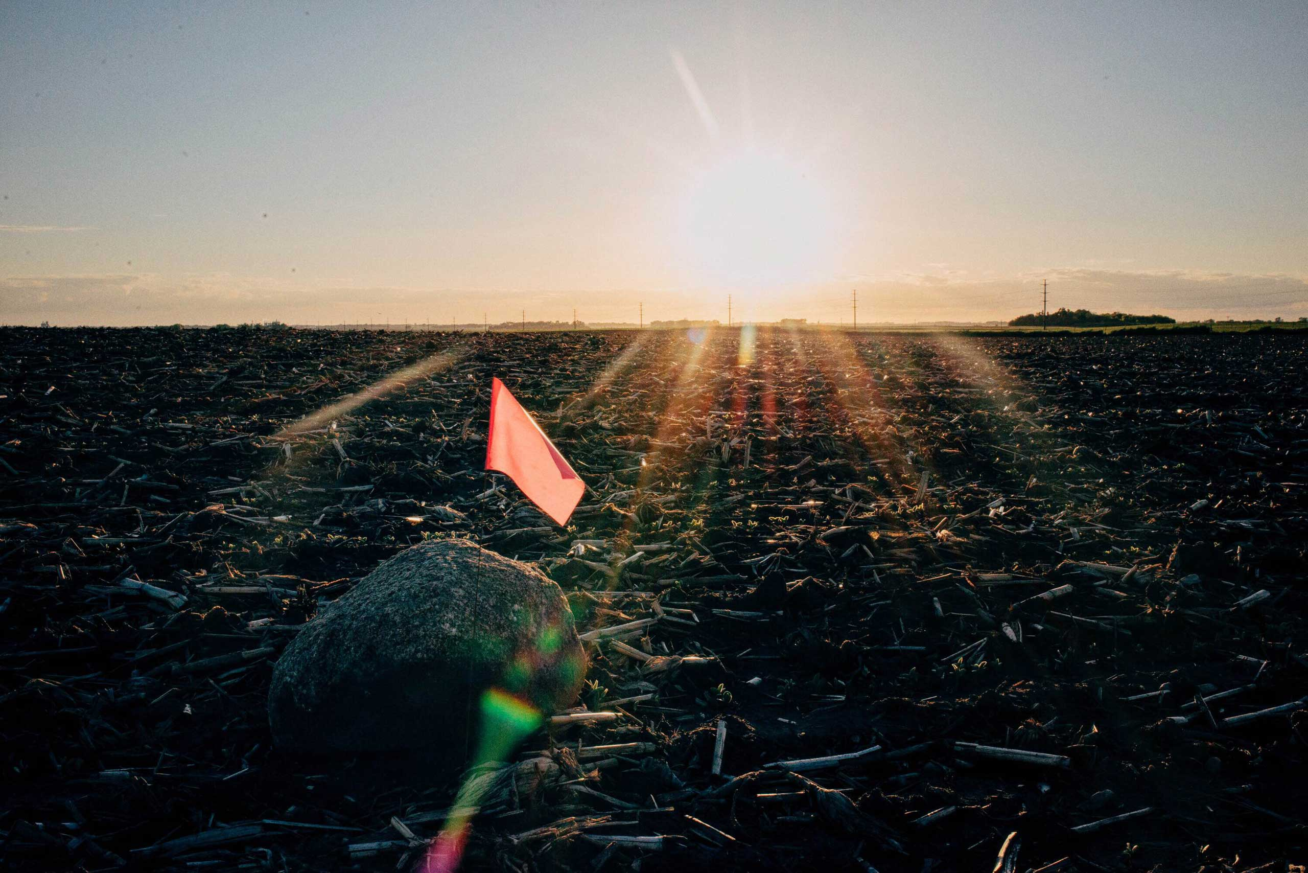 A large rock sits flagged in Delafield Township, Minnesota on May 31, 2016. While rock picking, if the found rock is too big to pick up by hand, the crew flags it and comes back with a loader later.