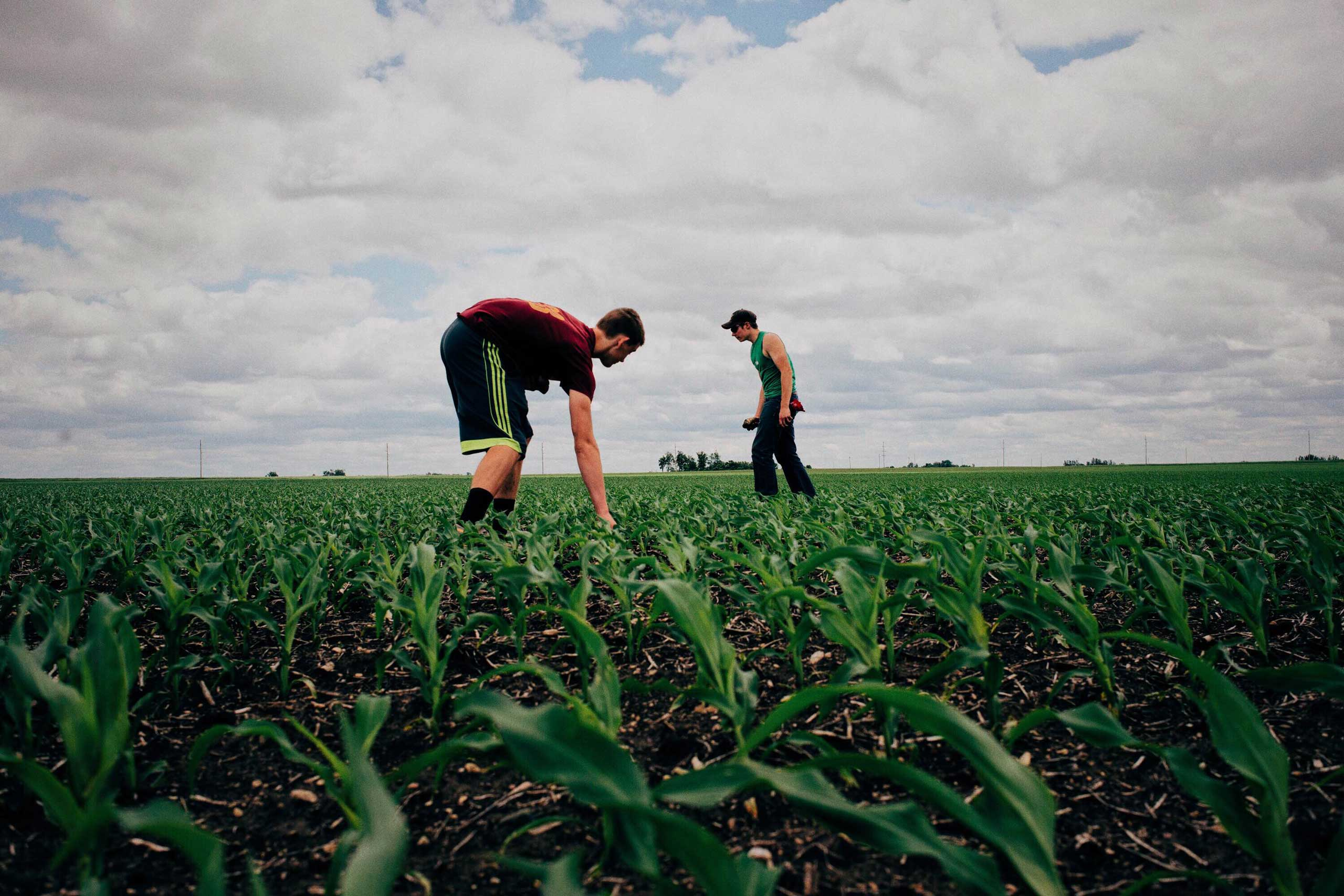 Ben White and Ethan Heintz pick rocks in a field in Springfield Township, Minnesota on June 1, 2016.