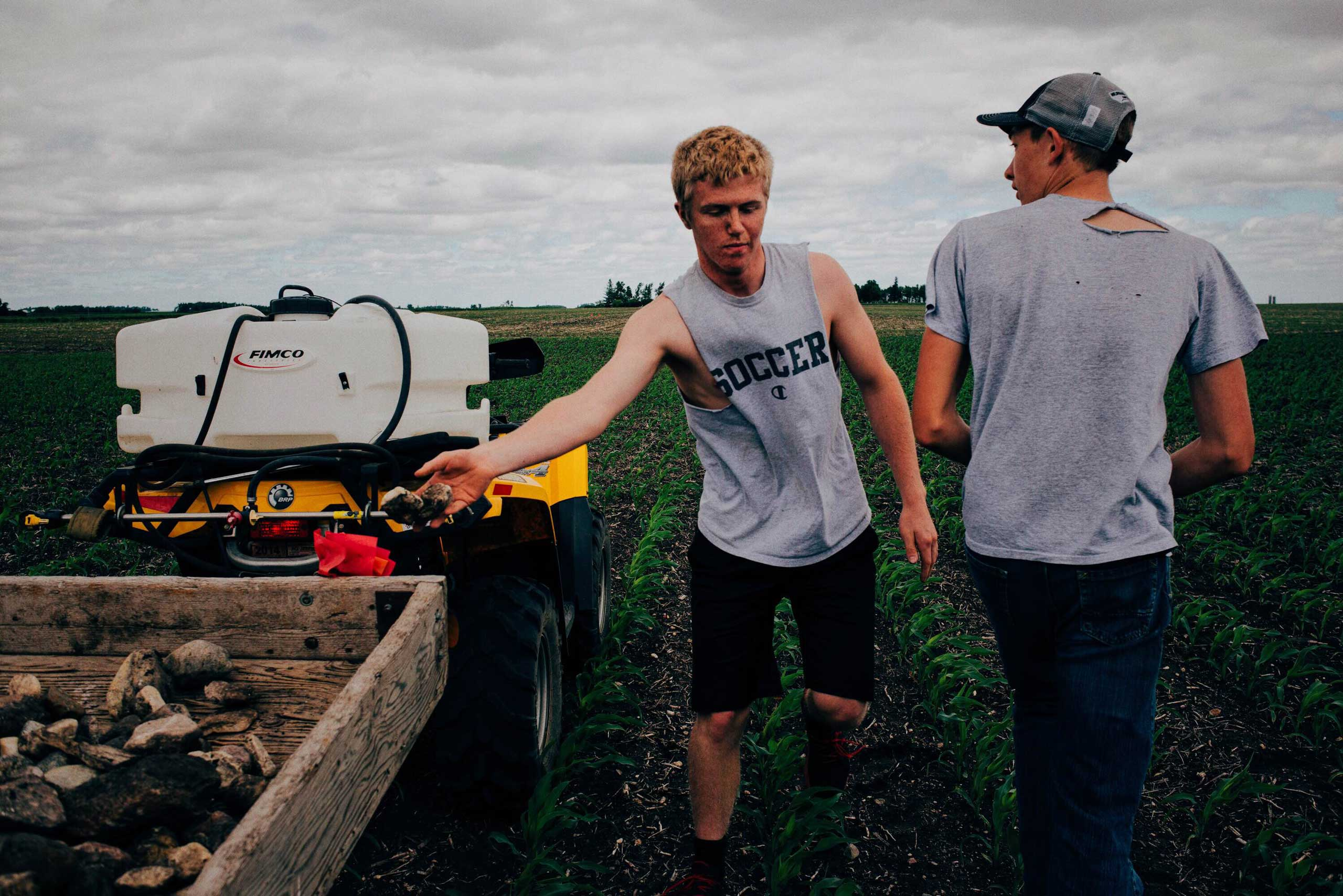 Levi Spittle and Isaiah Olsem throw rocks onto a trailer behind the ATV they use to pick rock in Springfield Township, Minnesota on June 1, 2016.