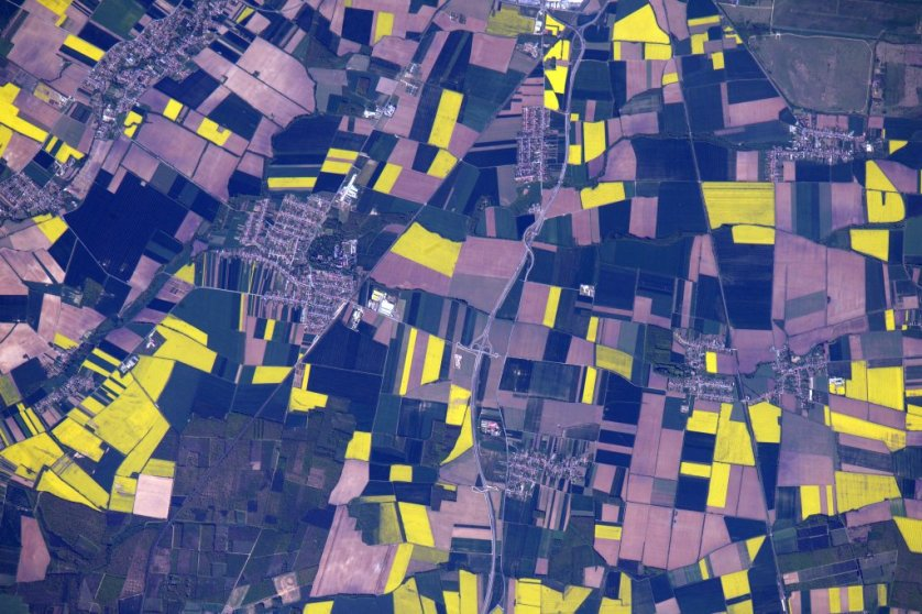 Bright yellow plots of rape seed growning in Szombathely, Hungary