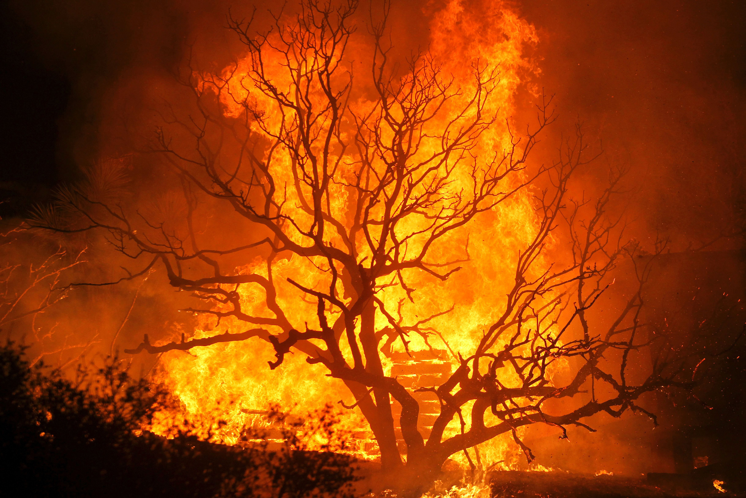 The Blue Cut wildfire burns structures and trees near Cajon Pass, north of San Bernardino, Calif., Aug. 16, 2016.
