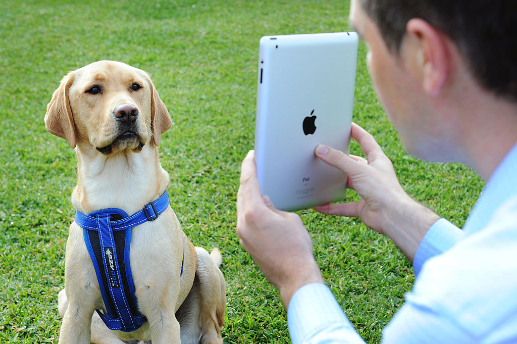 A dog talks to its owner through Skype in Melbourne, Victoria.
