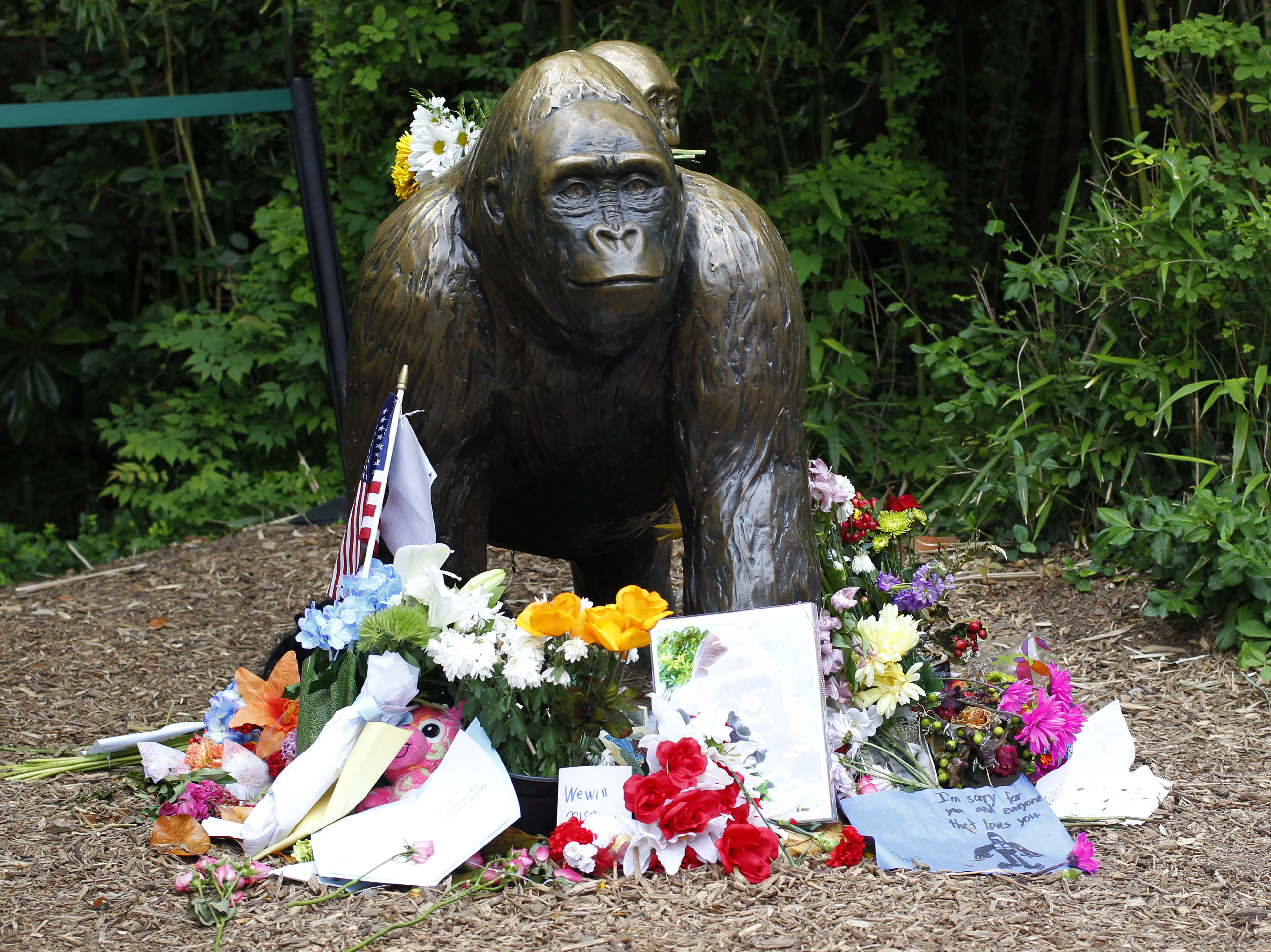 Flowers lay around a bronze statue of a gorilla and her baby outside the Cincinnati Zoo's Gorilla World exhibit in Cincinnati, Ohio, on June 2, 2016.
