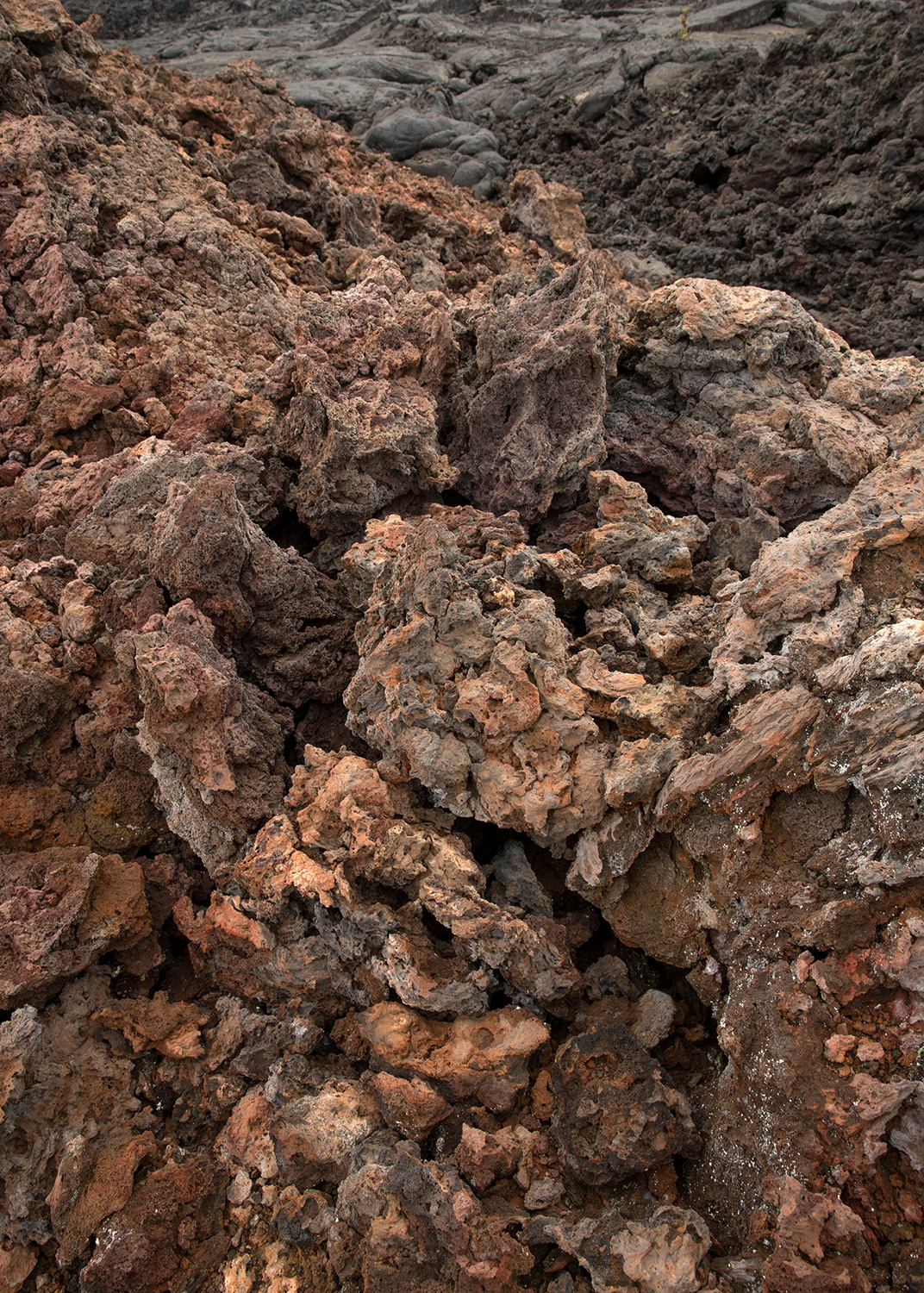 A detail of a lava field at the HI-SEAS Mars simulation habitat on the island of Hawaii on Aug. 29, 2016.