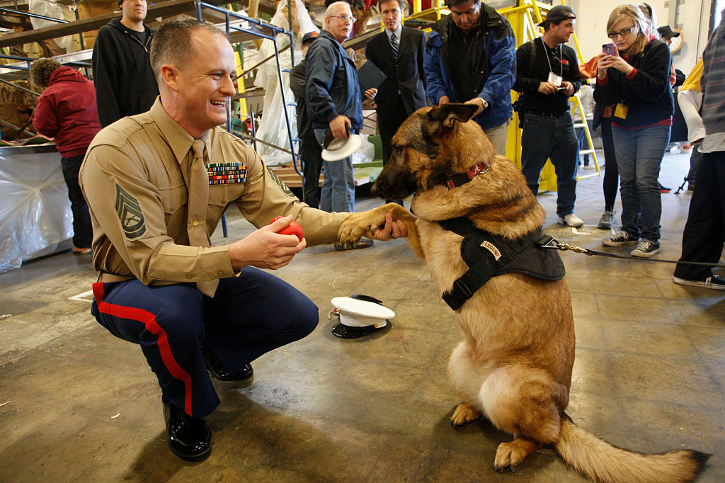 U.S. Marine Gunnery Sgt. Christopher Willingham is photographed with Lucca on Dec. 27, 2012. Lucca was awarded for completing 400 missions even after losing one of her legs while searching for homemade bombs in Afghanistan.