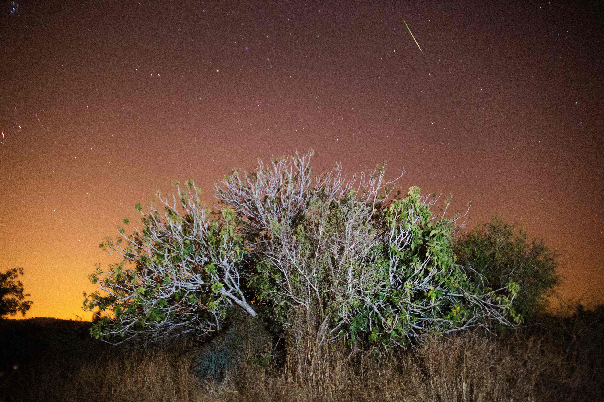 A Perseid meteor streaks across the sky above trees in the central Israeli village of Luzit on Aug. 12, 2016.