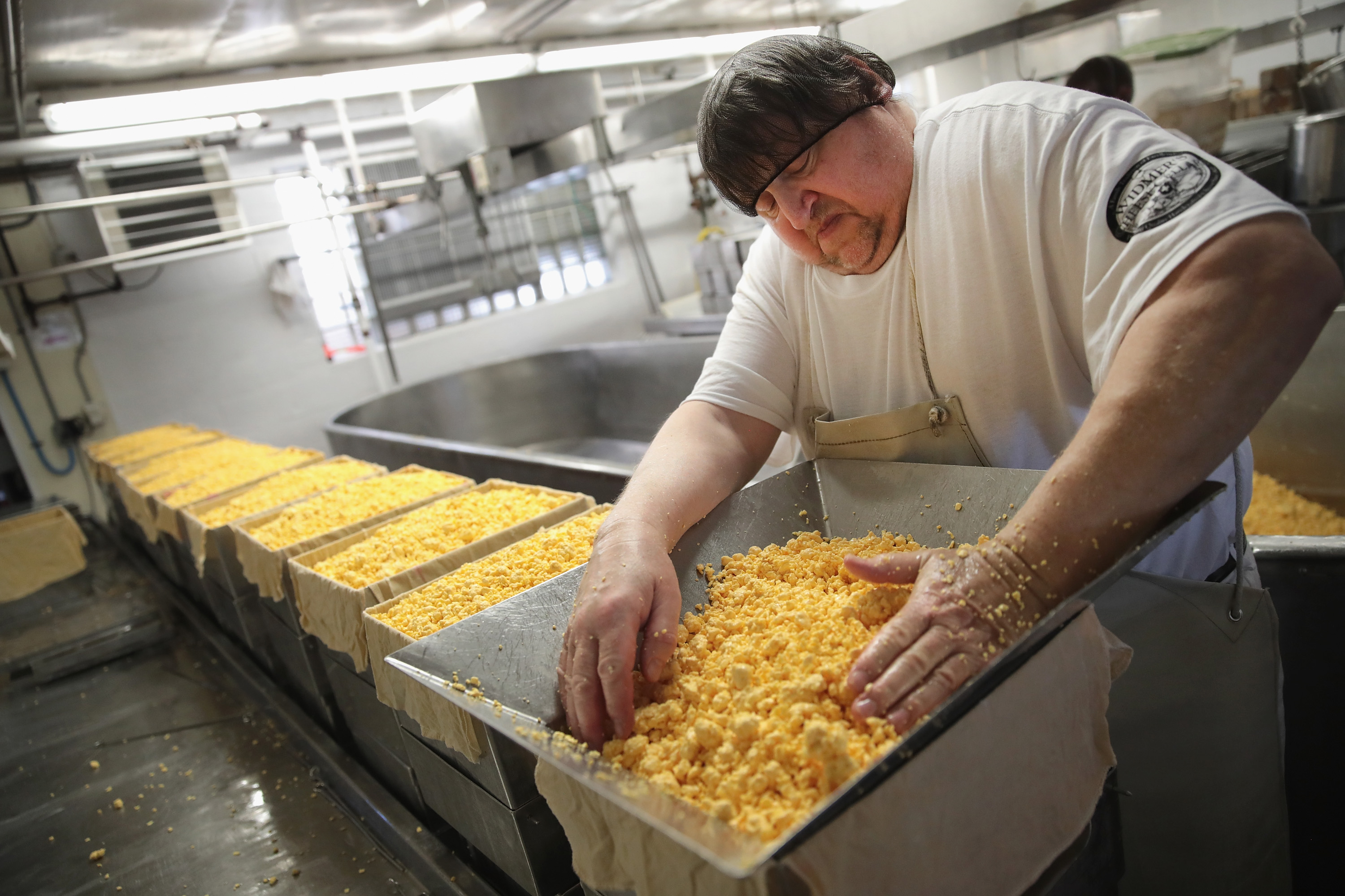THERESA, WI - JUNE 27:  Lenny Zimmel puts Colby cheese curds into forms to make 40 pounds blocks of cheese at the Widmer's Cheese Cellars on June 27, 2016 in Theresa, Wisconsin. Widmer's is an artisanal cheesemaker that has produced cheese in the same facility for four generations much the same way as it was made by the founder, with traditional open vats and curds being stirred and scooped into molds by hand.  Record dairy production in the United States has produced a record surplus of cheese causing prices to drop. Despite this surplus Widmer's says it continues to see growth as consumers continue to gravitate toward craft-made food products.