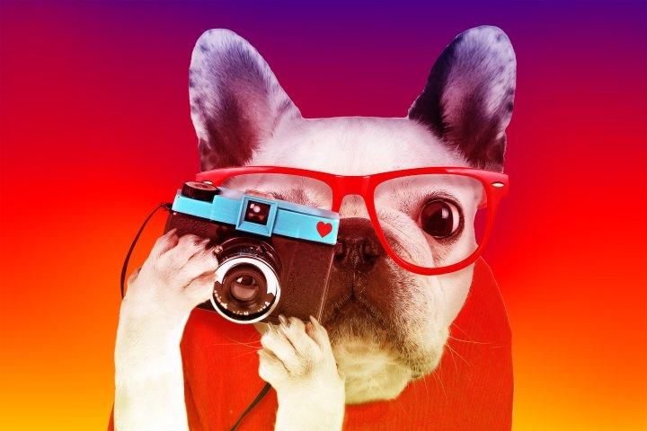 Weird dogs of instagram
