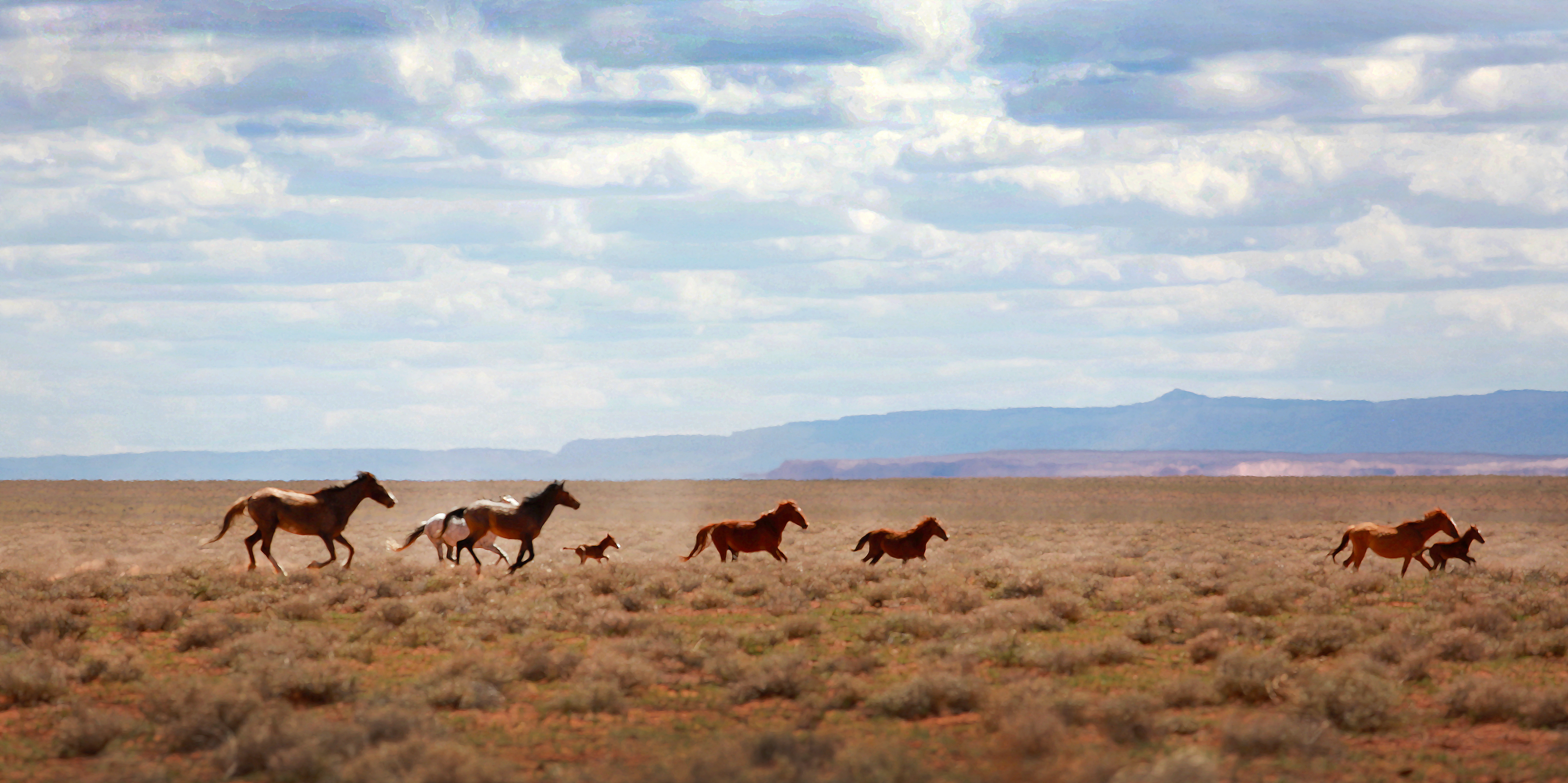Horses and colts running wild on the Navajo Nation Indian Reservation in Arizona USA near Indian Wells