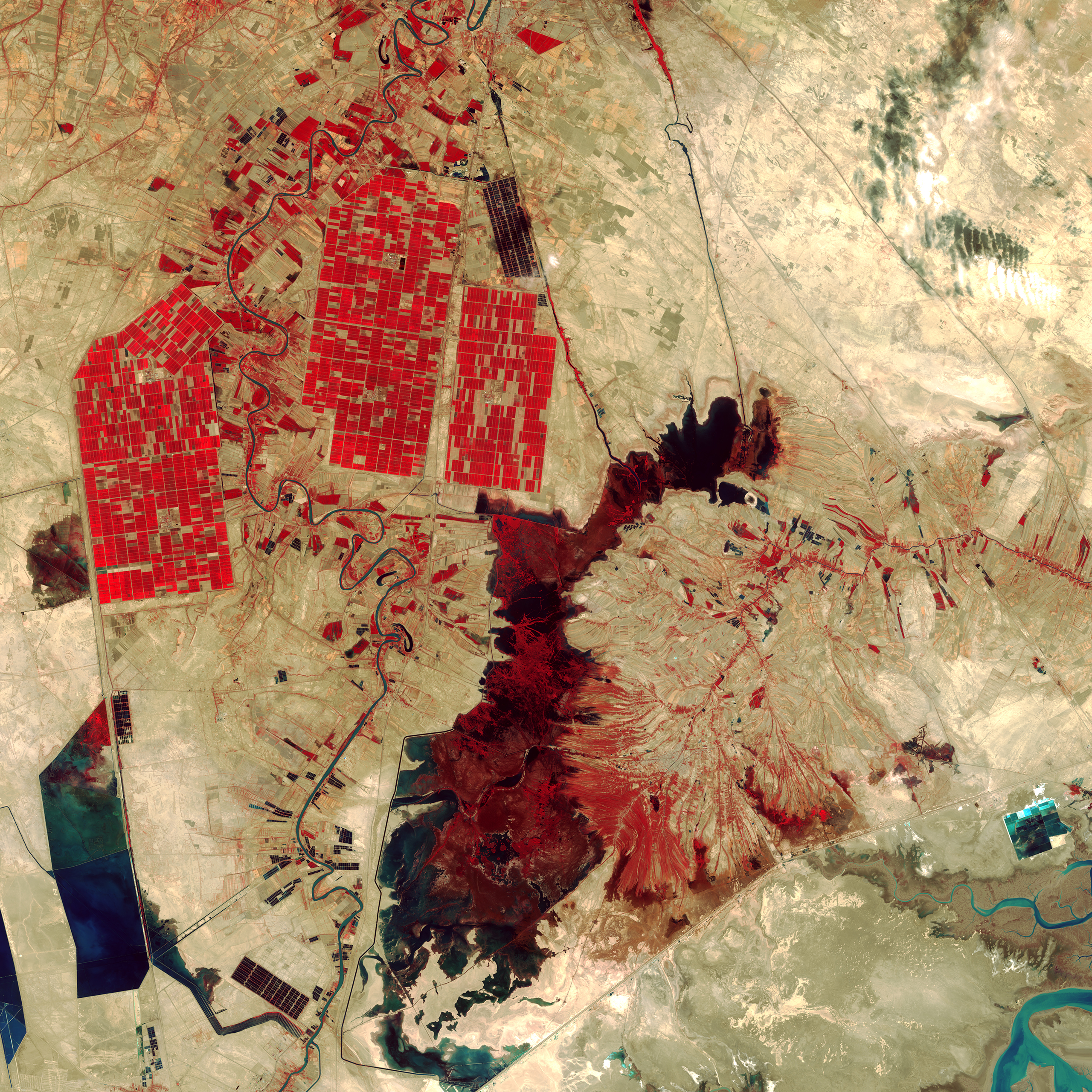 Shadegan Wetlands, IranRed areas in this Landsat 8 image depict actively growing vegetation. The rectangular shapes in the upper left reveal irrigated farmland while the dark red shape in the center of the image is Shadegan Pond. Oct. 12, 2014.